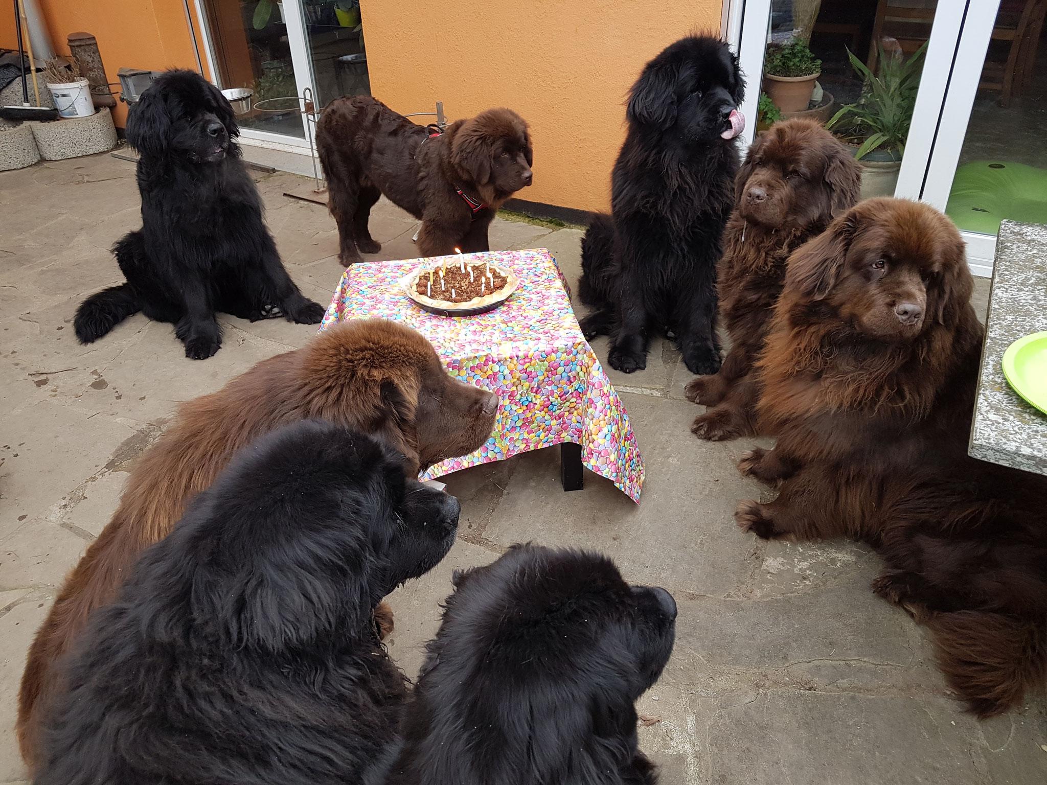 Ich Abby, Lesley, Bonaly, Djewa, Flurina, Gloria und die Gäste Bella und Pebbles