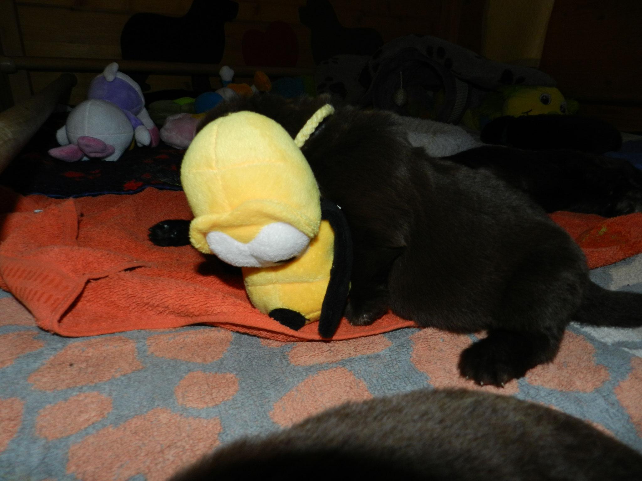 Gelbes Mädel hat Beute gemacht :))