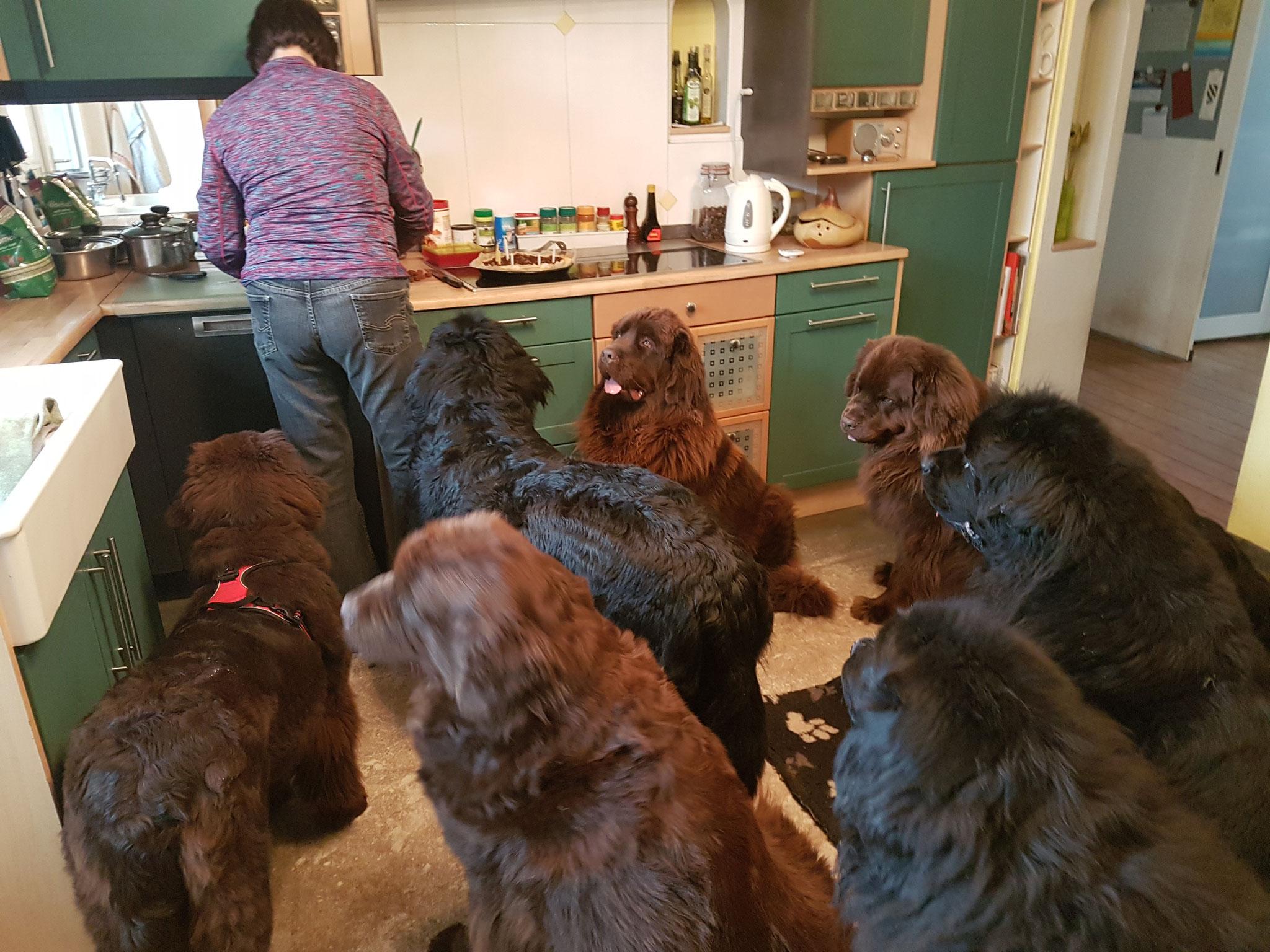 Wir bleiben mal besser in der Küche...