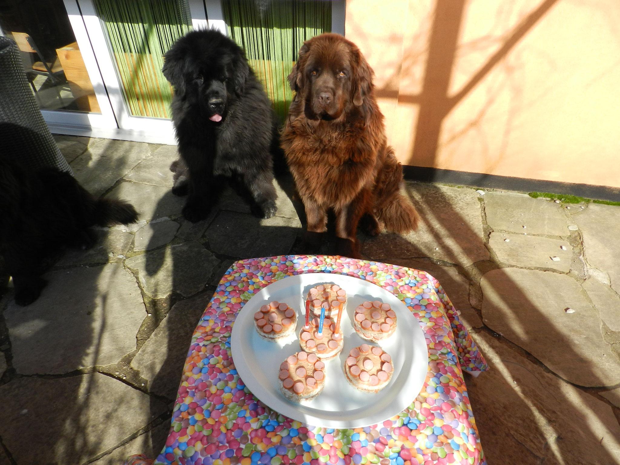 Gloria wartet gespant auf den feinen Kuchen