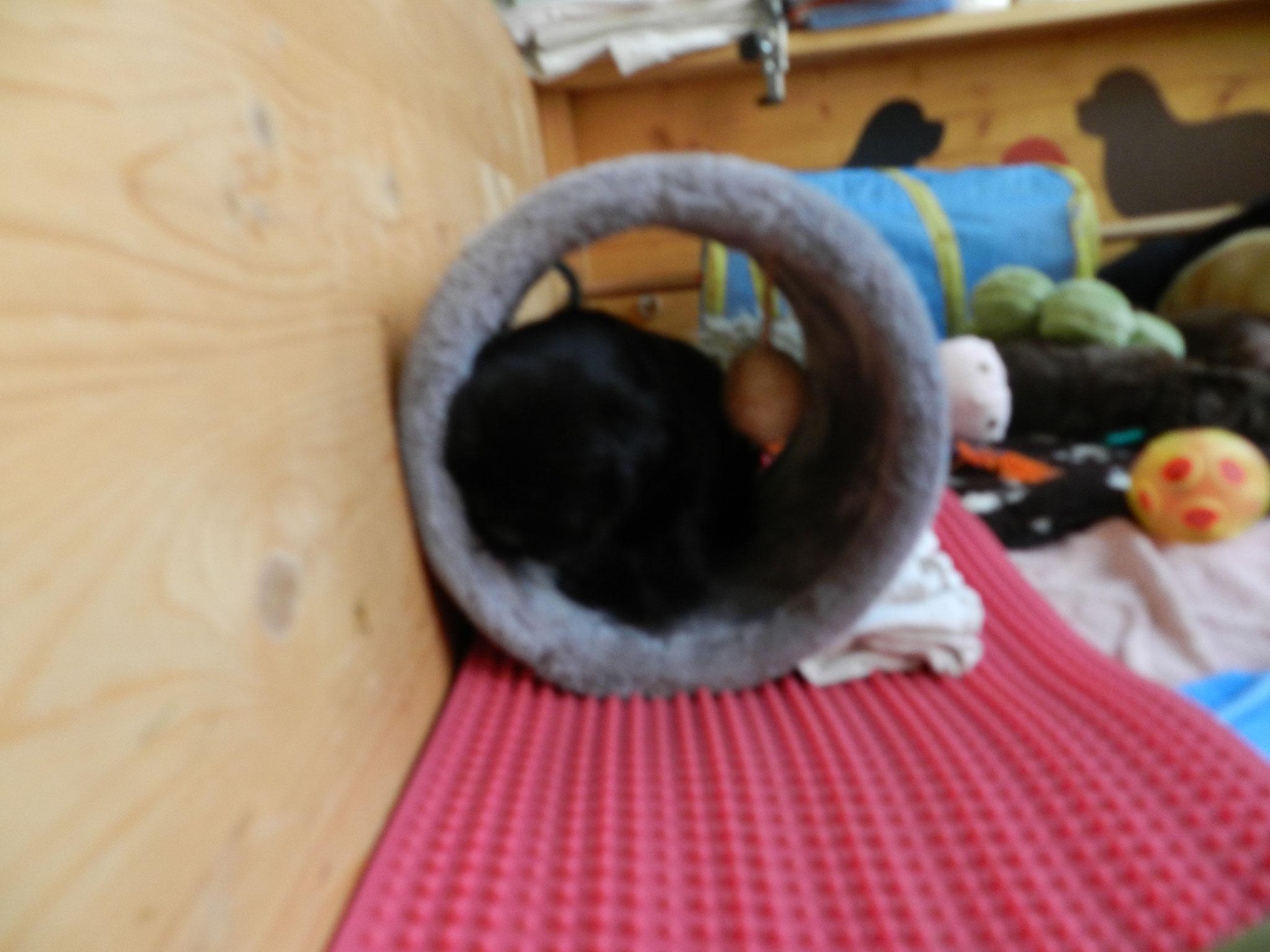 als Schlafplatz eignet sich der Tunnel auch
