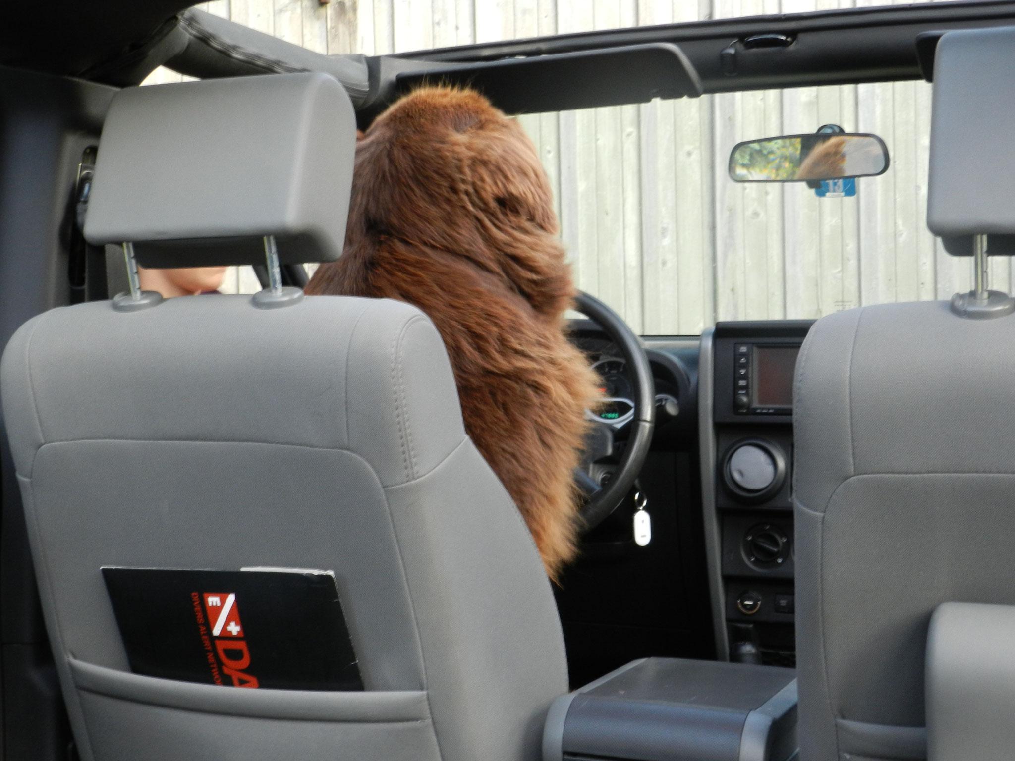 Bin ne prima Fahrerin...