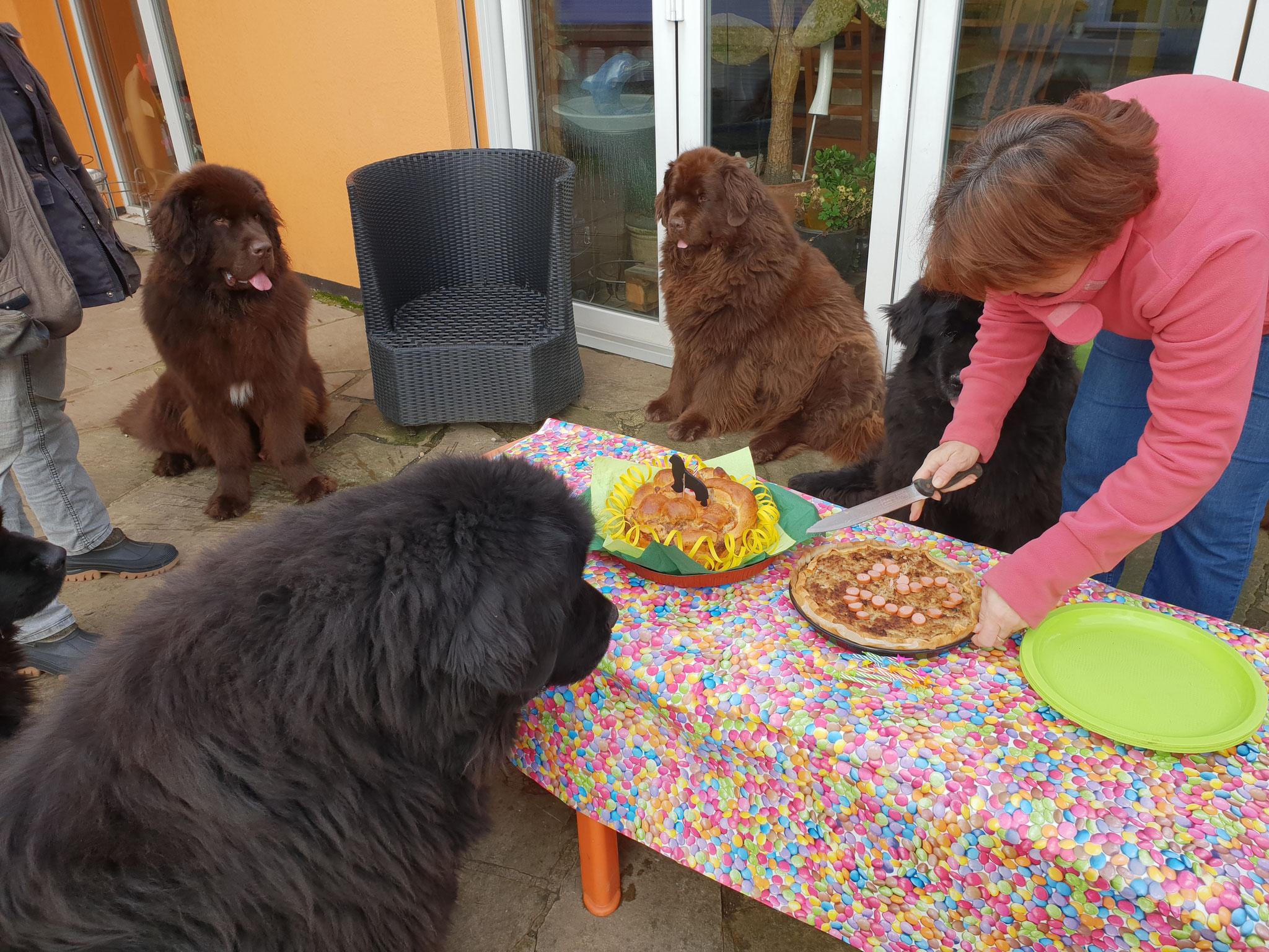 Abby auch für dich gibt es Kuchen
