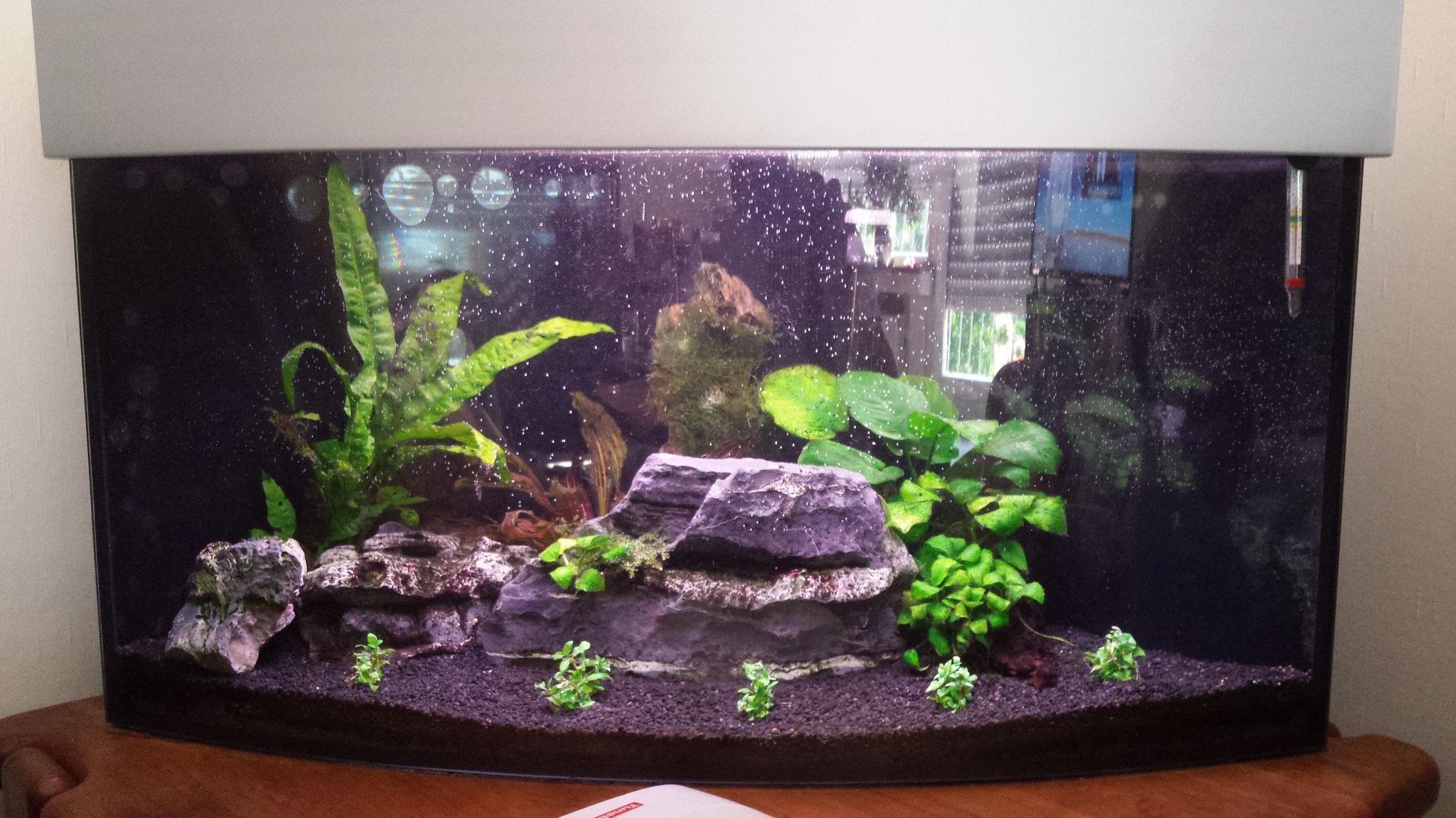 wichtiges in sachen aquarium aquarien service martin kompetenz f r privat und unternehmen. Black Bedroom Furniture Sets. Home Design Ideas
