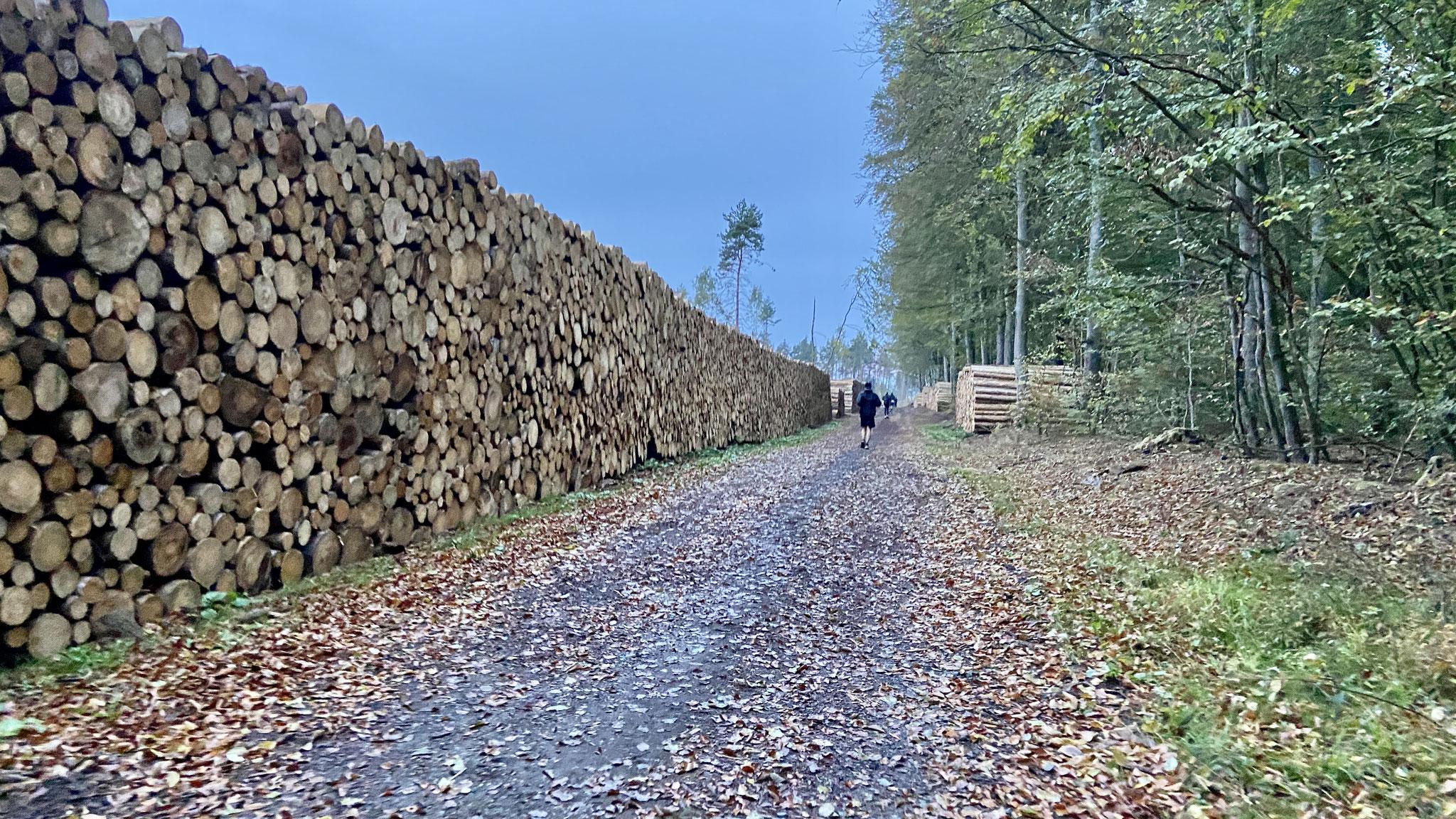 für die Wiederaufforstung des Waldes wird gelaufen!