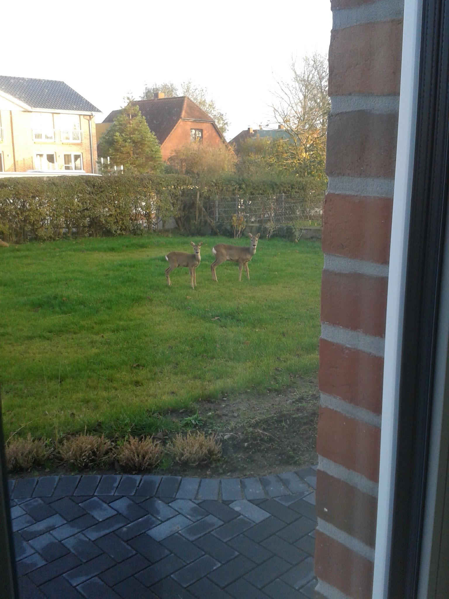 Auch die Rehe mögen unseren Garten (besonders die Rosen und Margeriten) und kommen gerne zu Besuch!