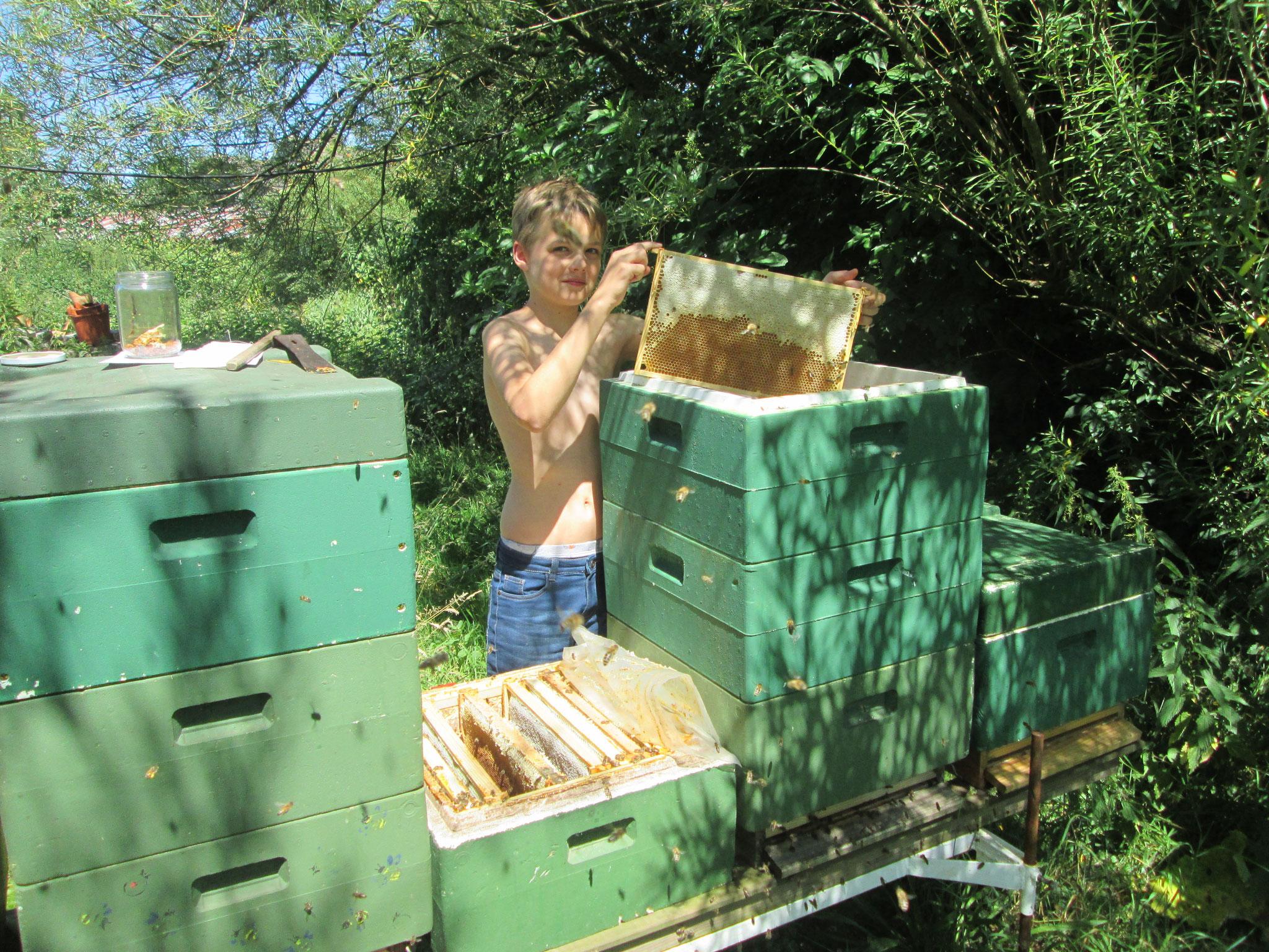 Mathis bei der Honigwabenentnahme (Beschreibung folgt unten). Auf einem Nachbarvolk steht ein Glas zur Propolisgewinnung bereit.