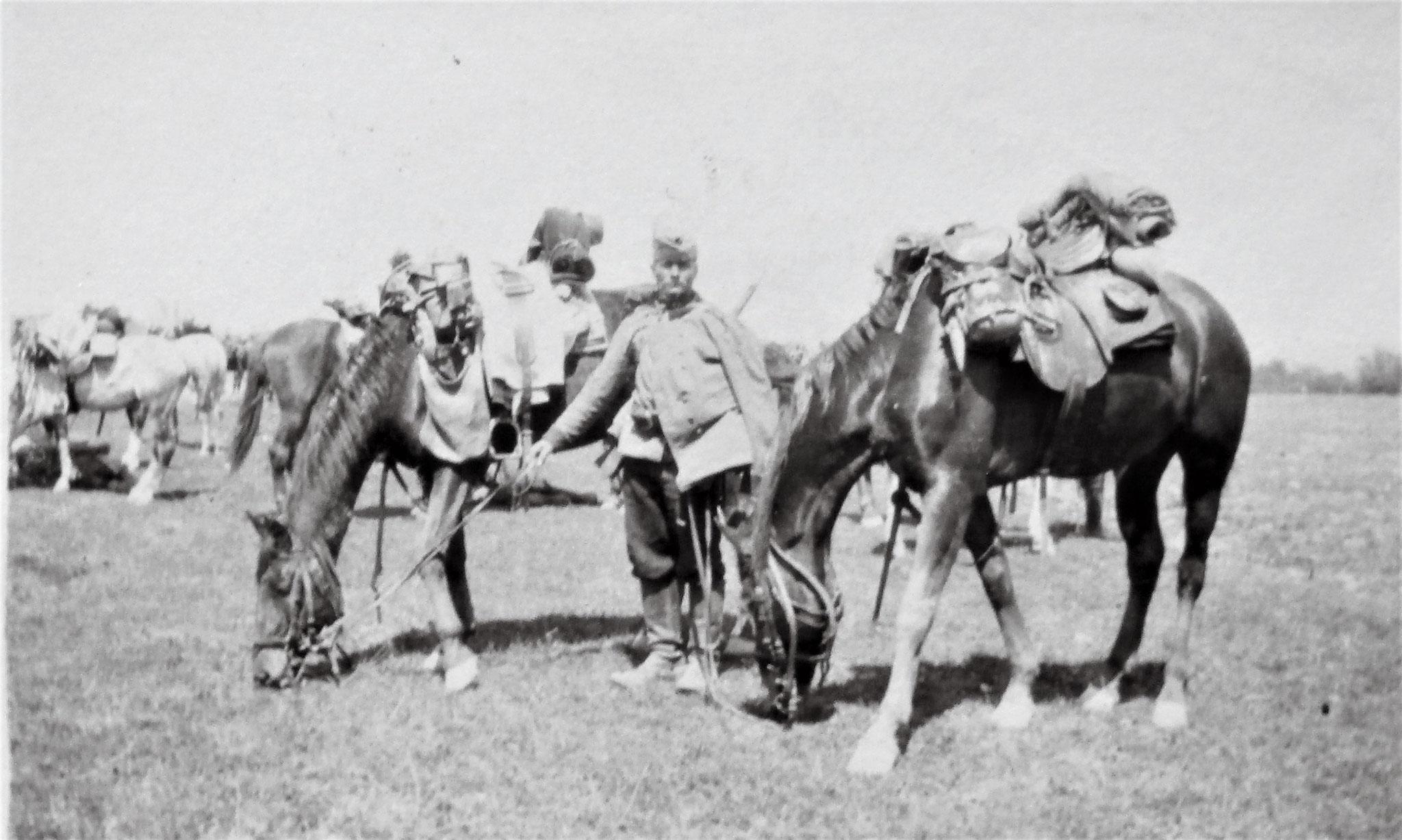 Sulkowskis Chargepferd Nepos mit Drag. Tassolt.
