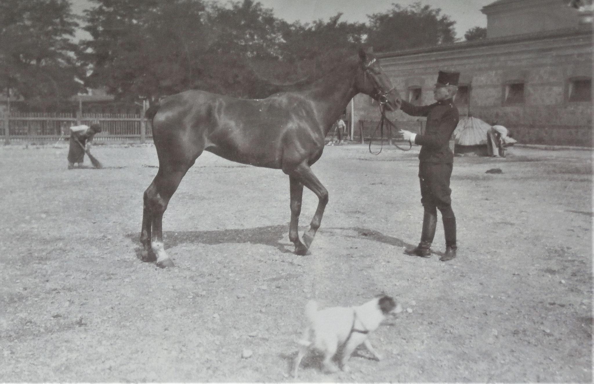 Mit Pferd Trapper + Gyp (Hund).