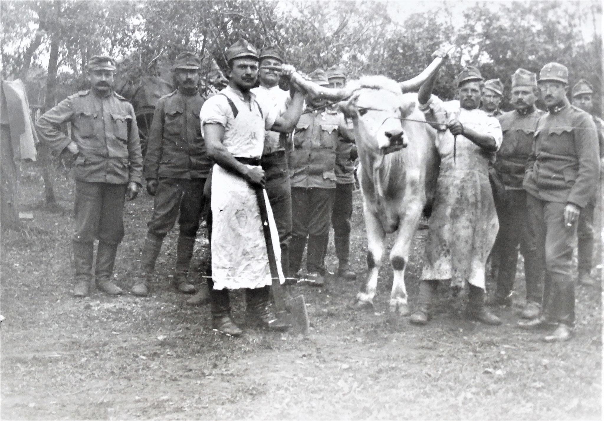 Der 2. ungarische Zugochse der 3. Esk., der nachdem der 1.  geschlachtet worden war, auch daran glauben musste.