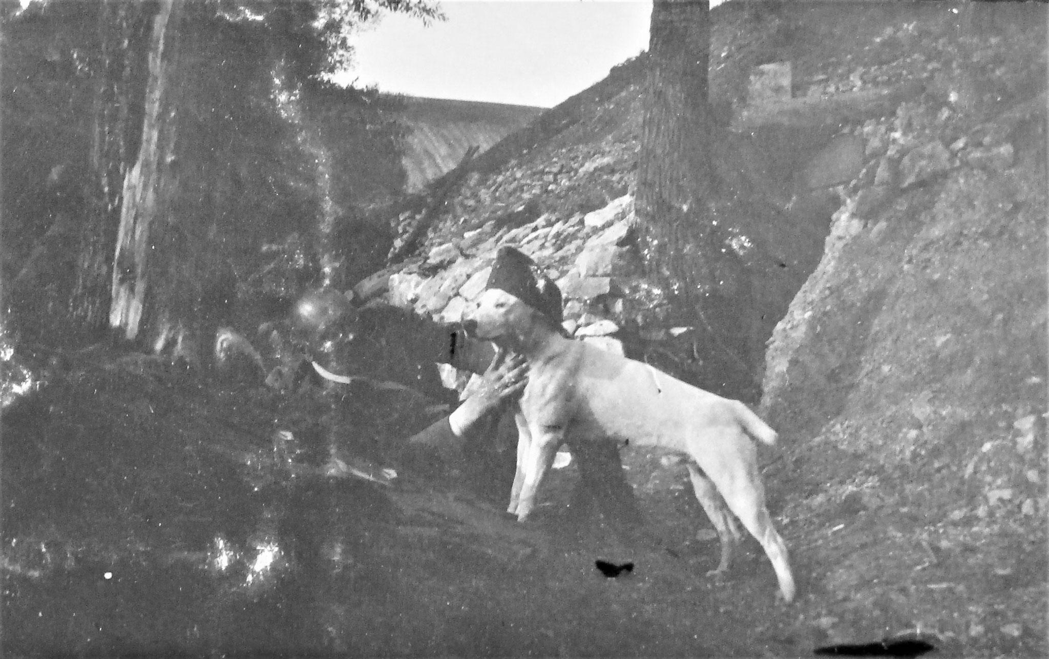 """""""Major"""", der frühere Hund Urams, jetzt bei meiner Tel.-Patr."""
