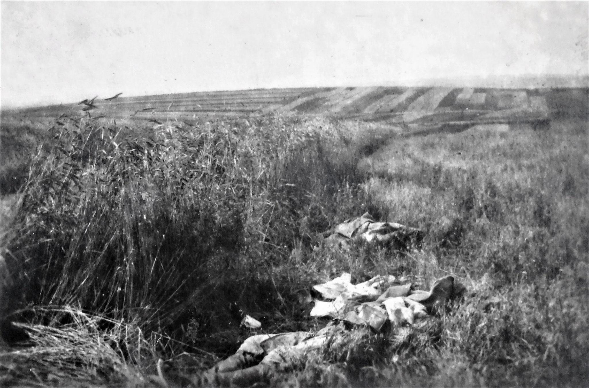 Gefallene Russen in den Feldern südl. der eroberten Stellung.