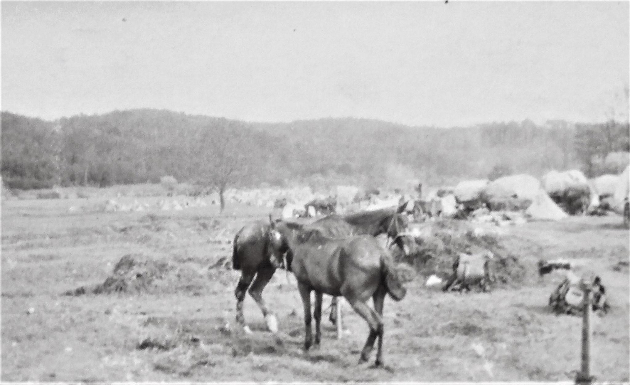 Lager des LIR. 5 (Pola) als Korps- od. Div. Res am 31. / 5. (vorne Train).