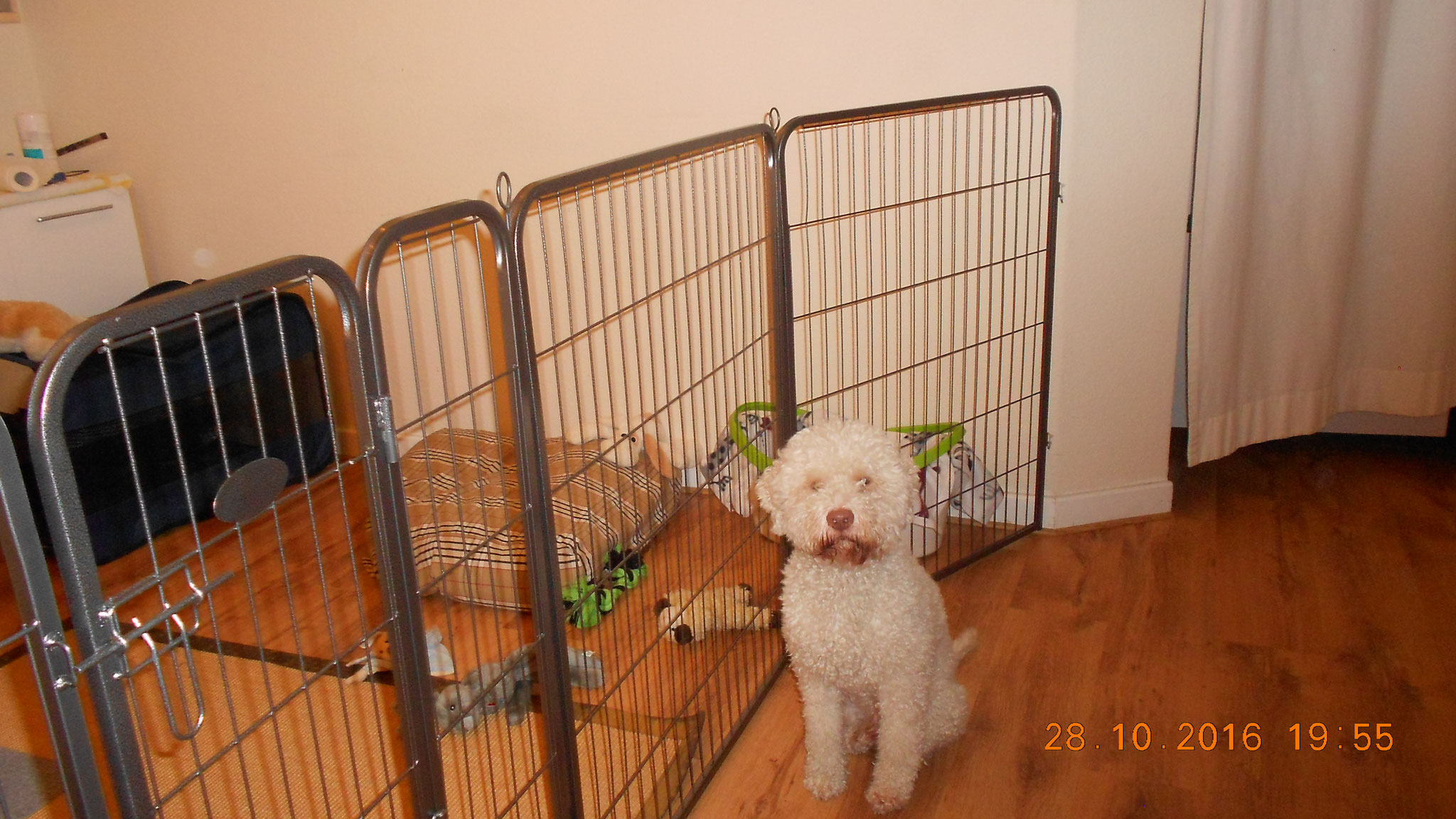 Emil fragt sich wohl, warum die jetzt hinter Gitter sind ----was haben die nur angestellt ;-)