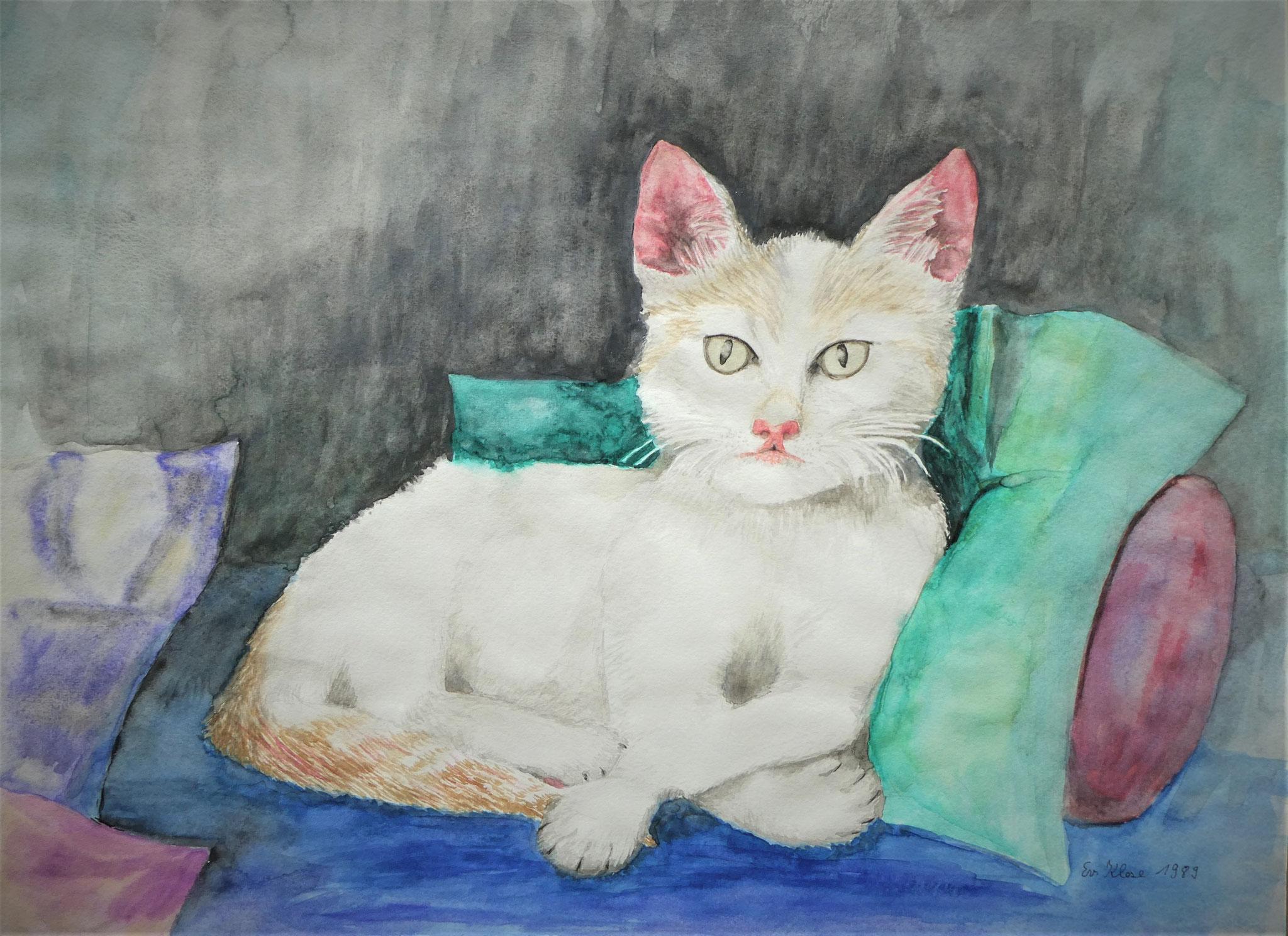 Weiße Katze - Aquarell - ca. 40 x 30 cm
