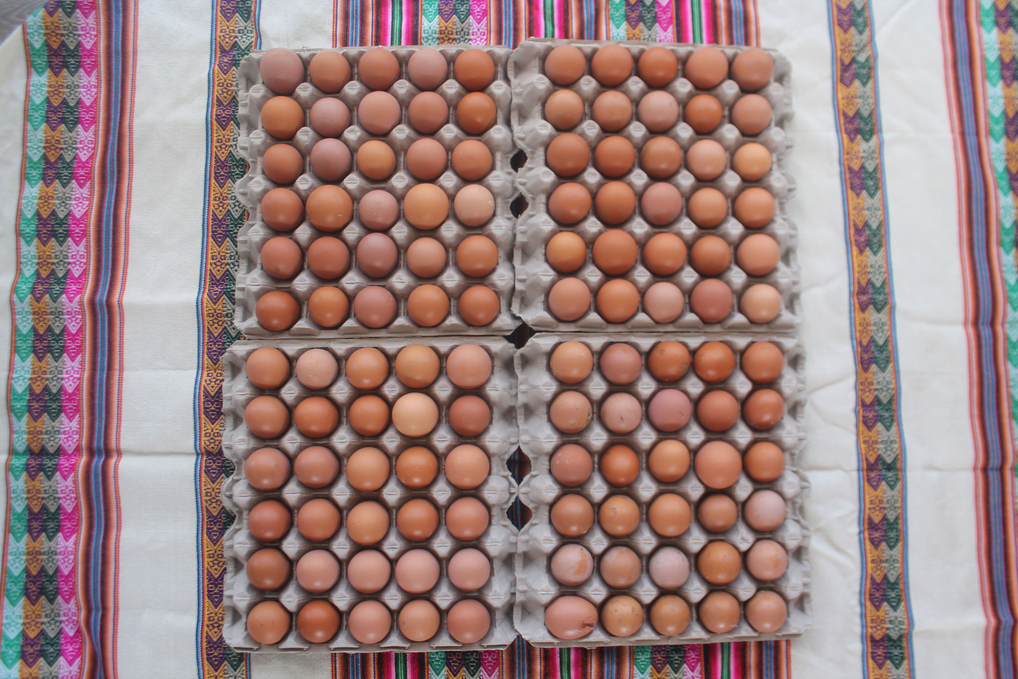 Huevos Alta Calidad