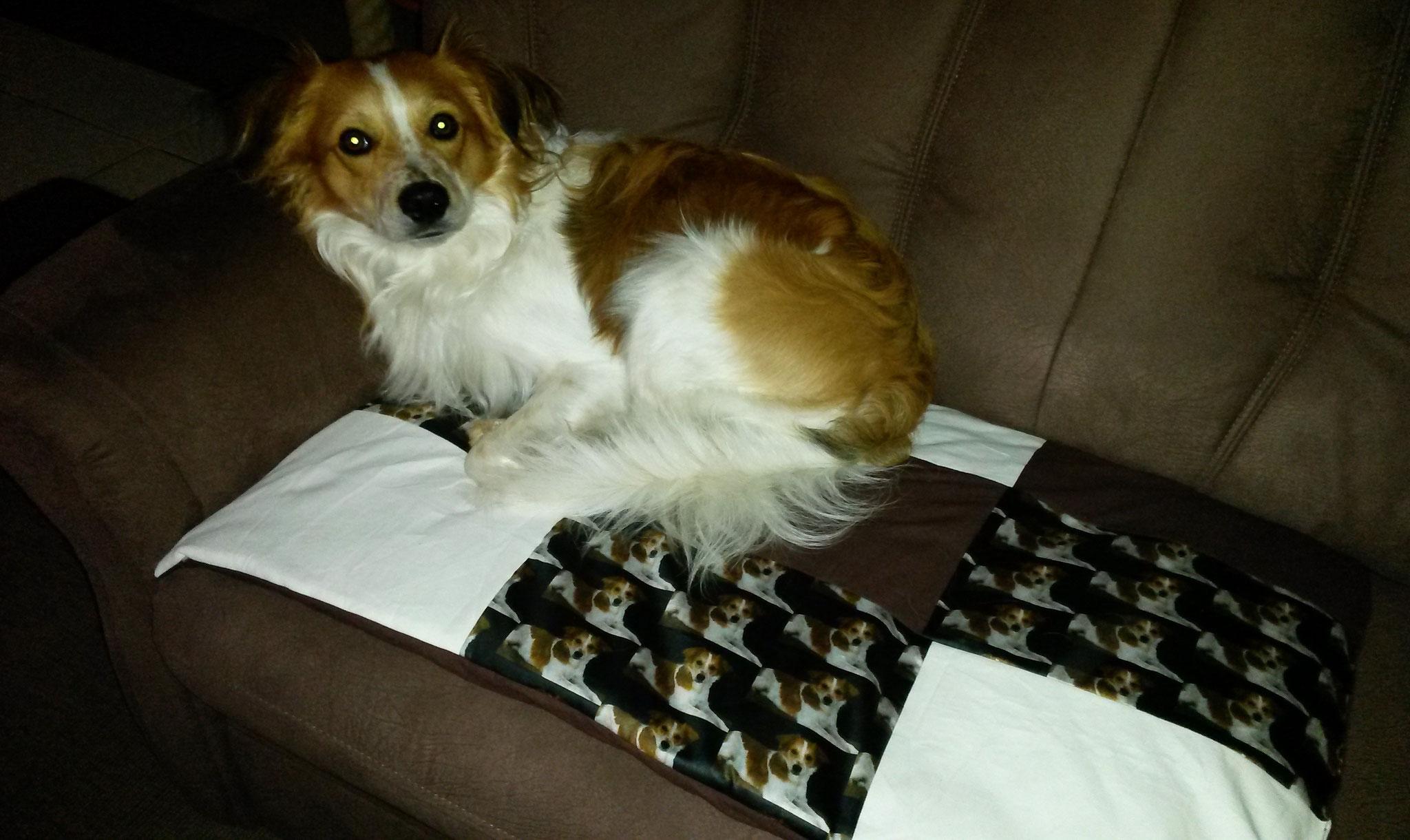 Frauchen hat mir eine schicke Liegedecke fürs Sofa gemacht