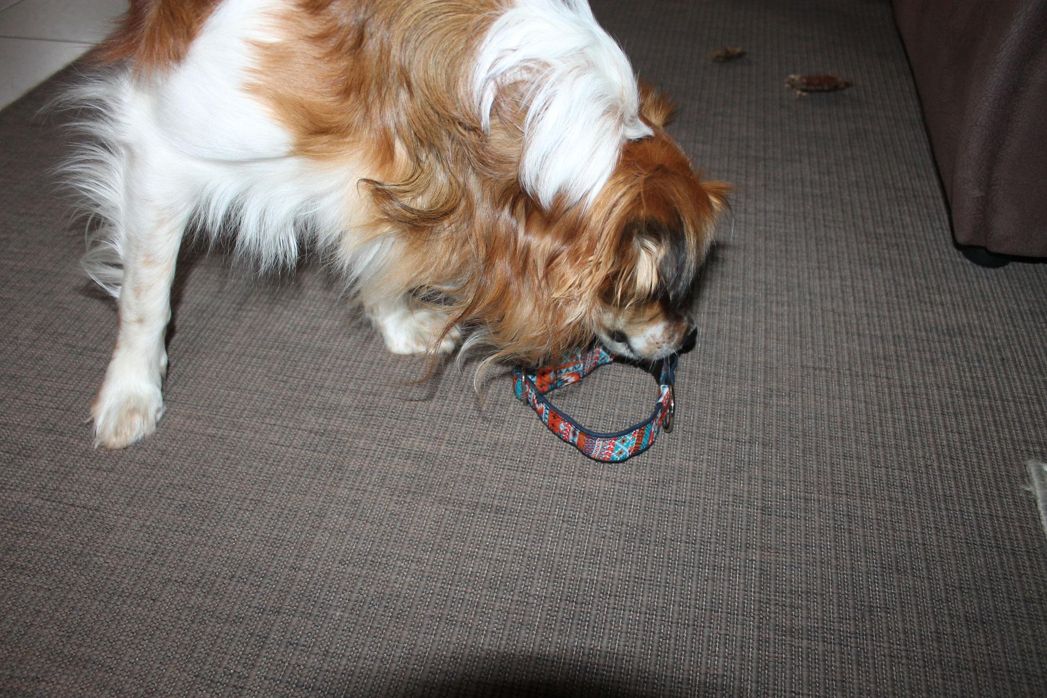 Oh, Frauchen hat ein neues Halsband genäht...