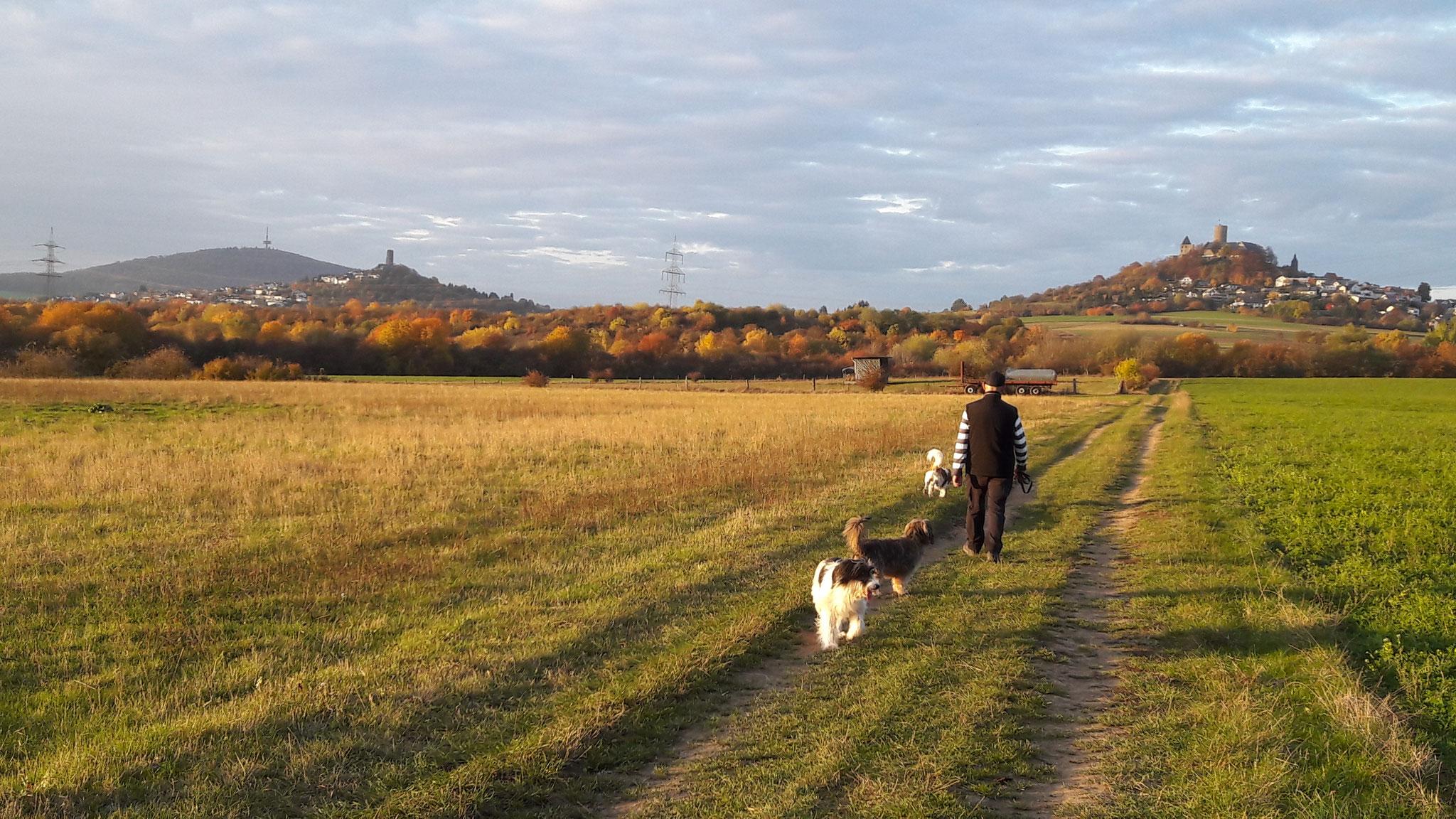 Toller Herbstspaziergang mit Bella, Bonito und Chester