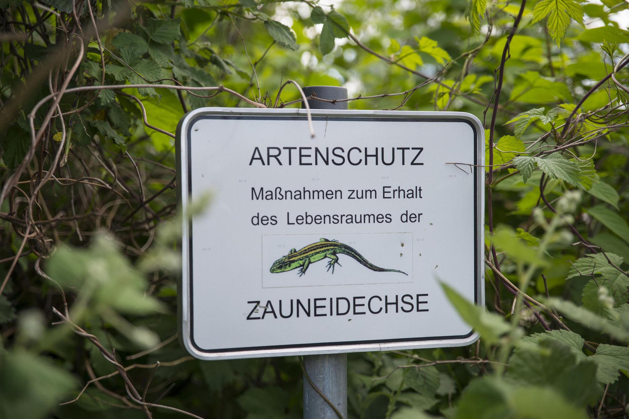 Münsterland, Alleenradweg