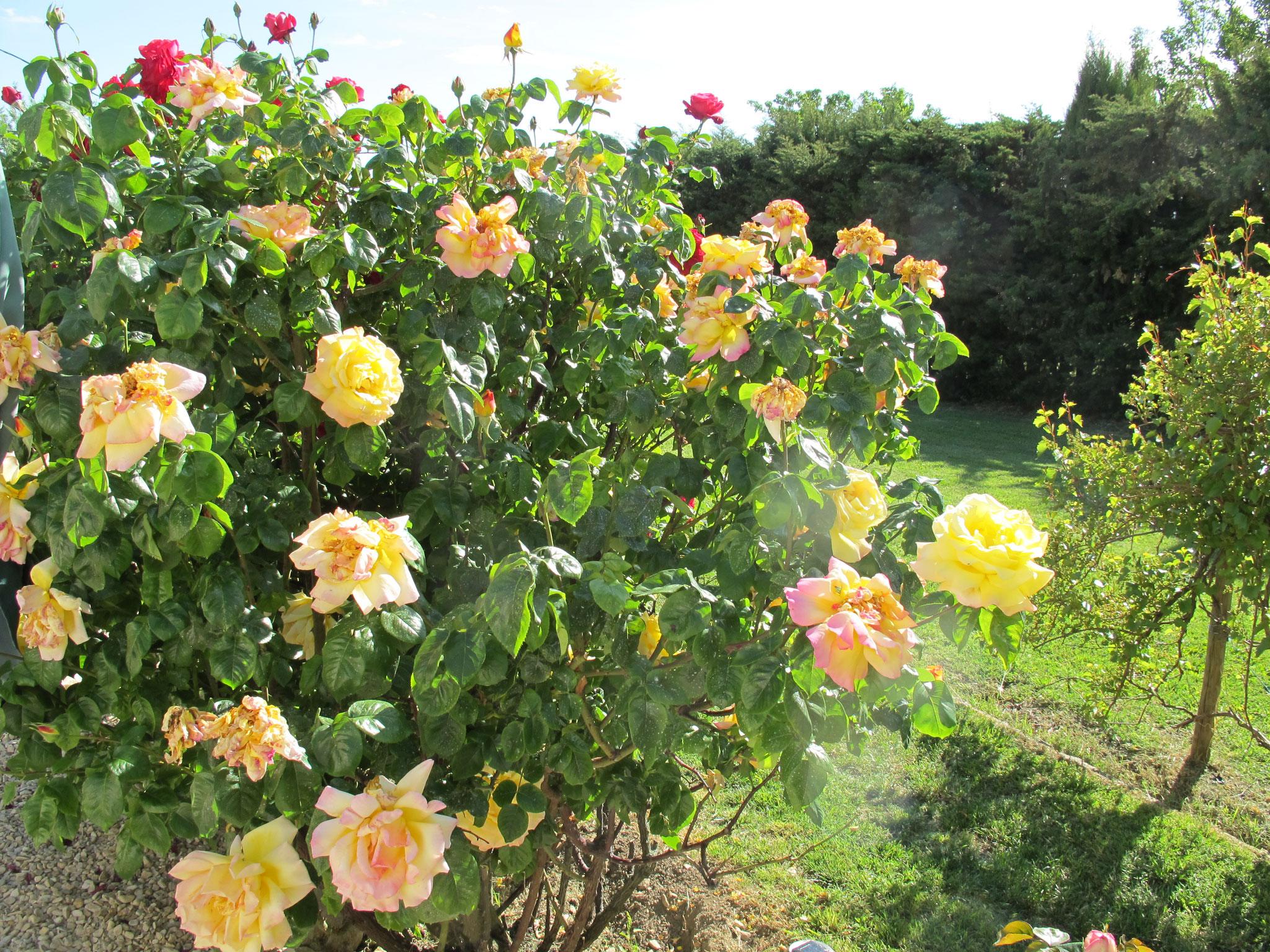 loucardaline-bedoin-ventoux-chambre d hotes-vaucluse-vacances-été-jardin fleurie