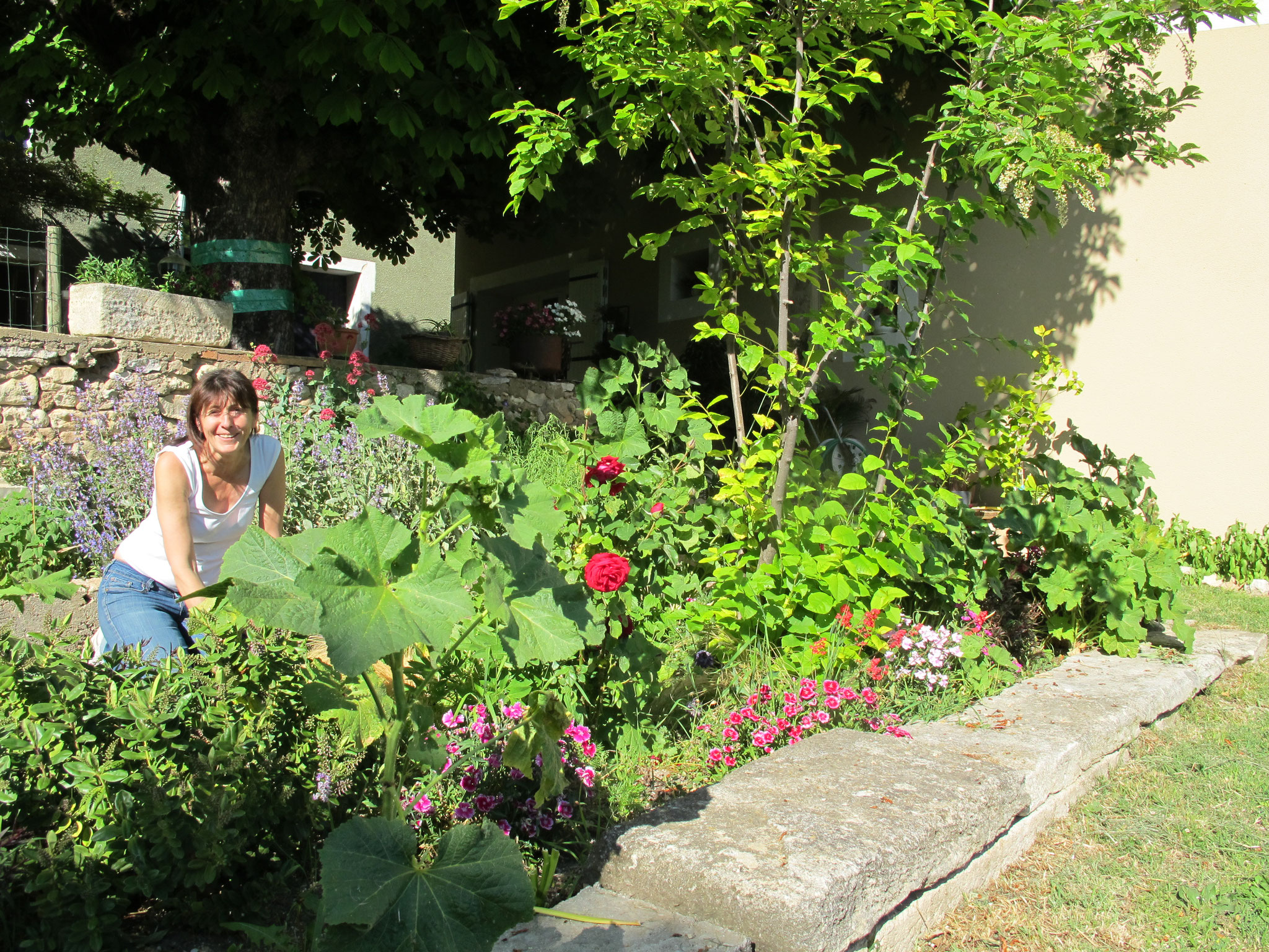 loucardaline-bedoin-ventoux-chambre d hotes-vaucluse-vacances-famille-été-fleur-vacances