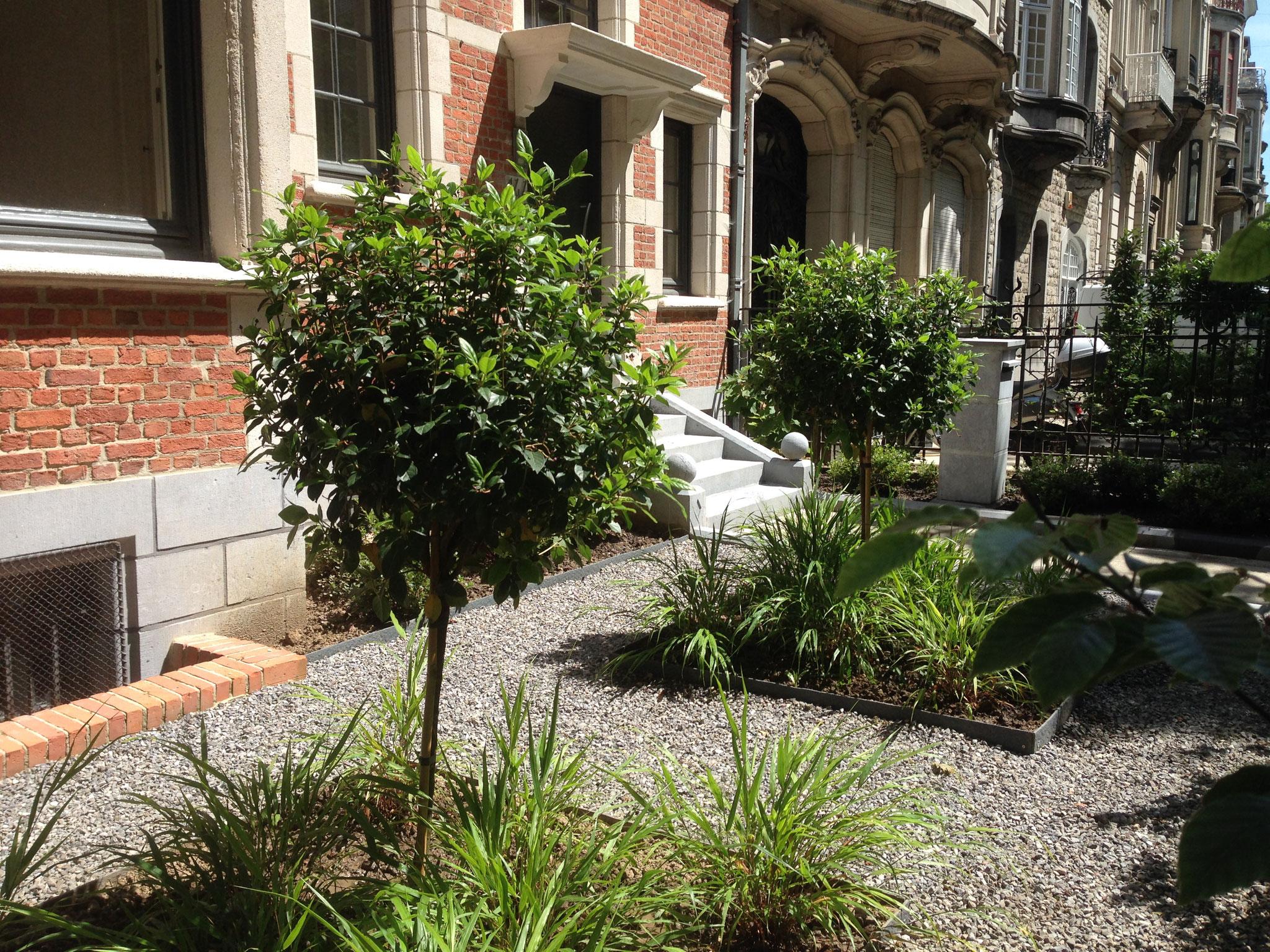 Jardin avant de ville - Conception & réalisation - Photo personnelle. Amenagement jardin Bruxelles