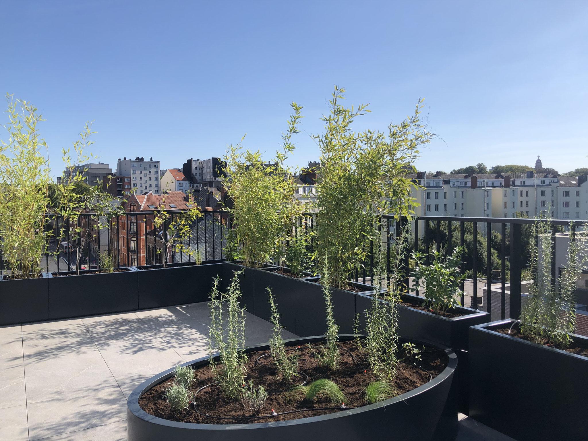 Rooftop Terrasse 40m2 - Aménagement contemporain - Partie boisée. Aménagement Jardin Bruxelles