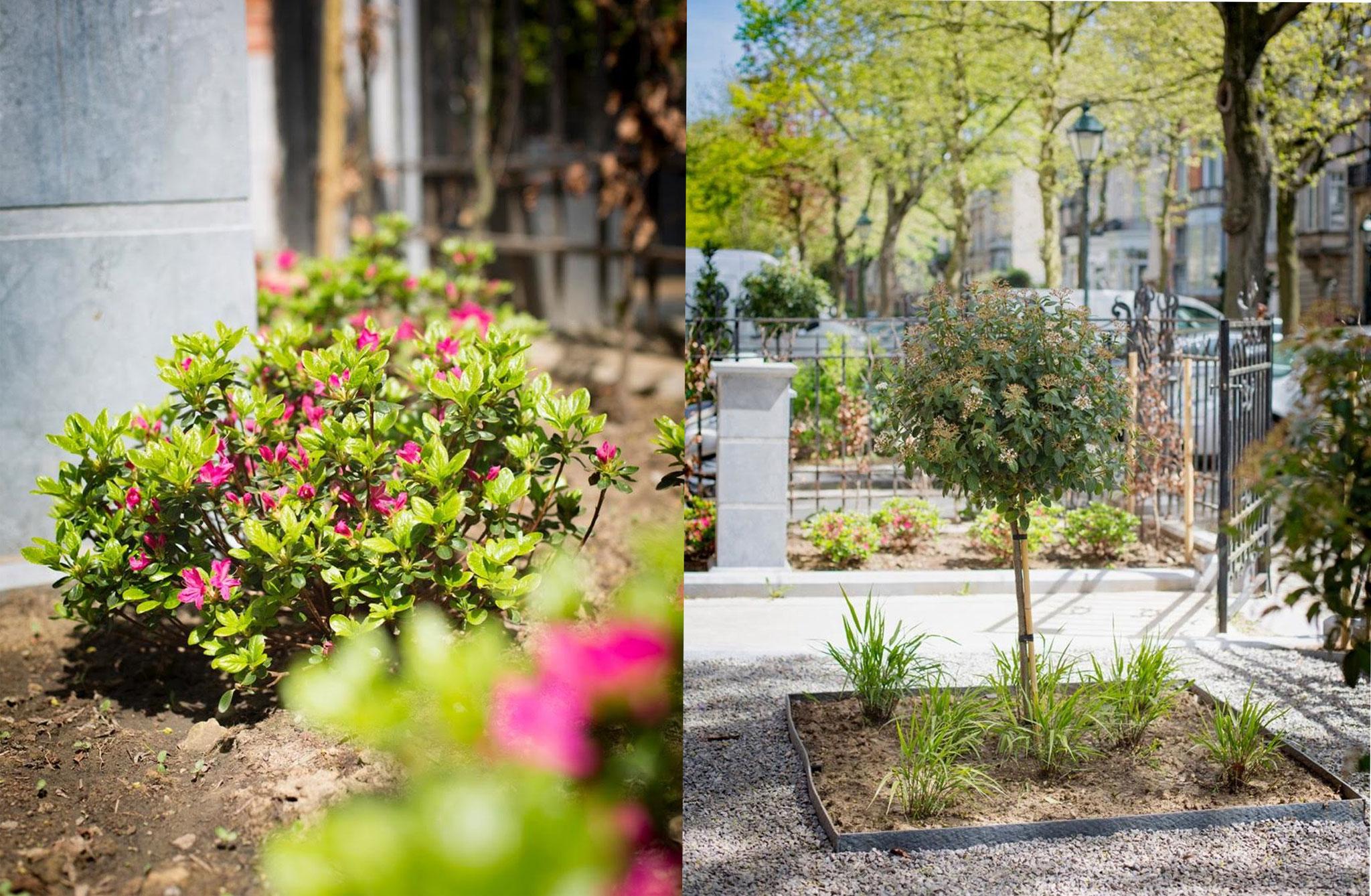 Jardin avant de ville - Conception & réalisation - Photos Coralie de Nobrega 2016. Amenagement jardin Bruxelles