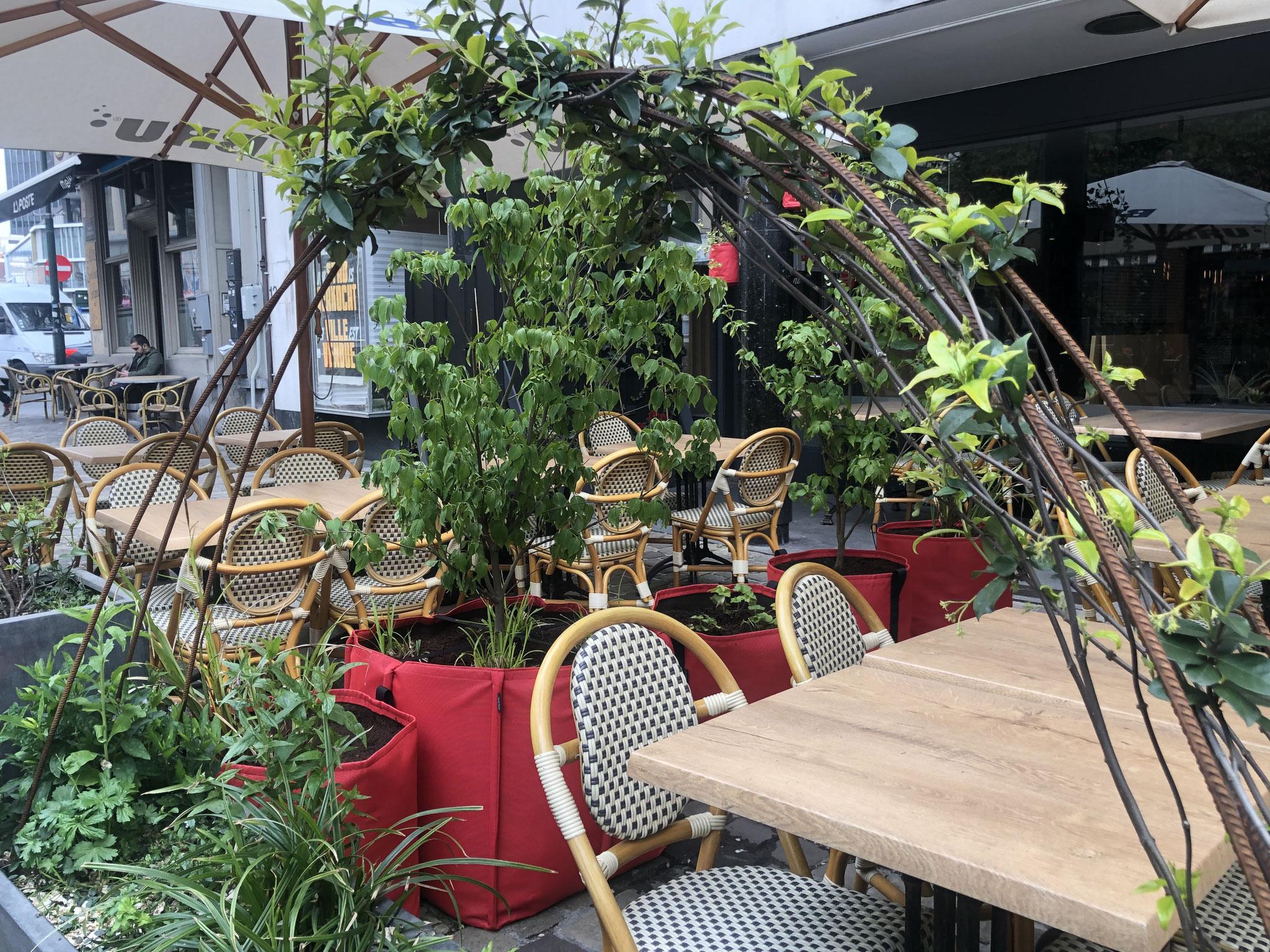 """Terrasse de 50m2 - Ambiance """"Sous-Bois"""" - Détails sur les bacs rouges de la travée centrale. Aménagement jardin Bruxelles"""