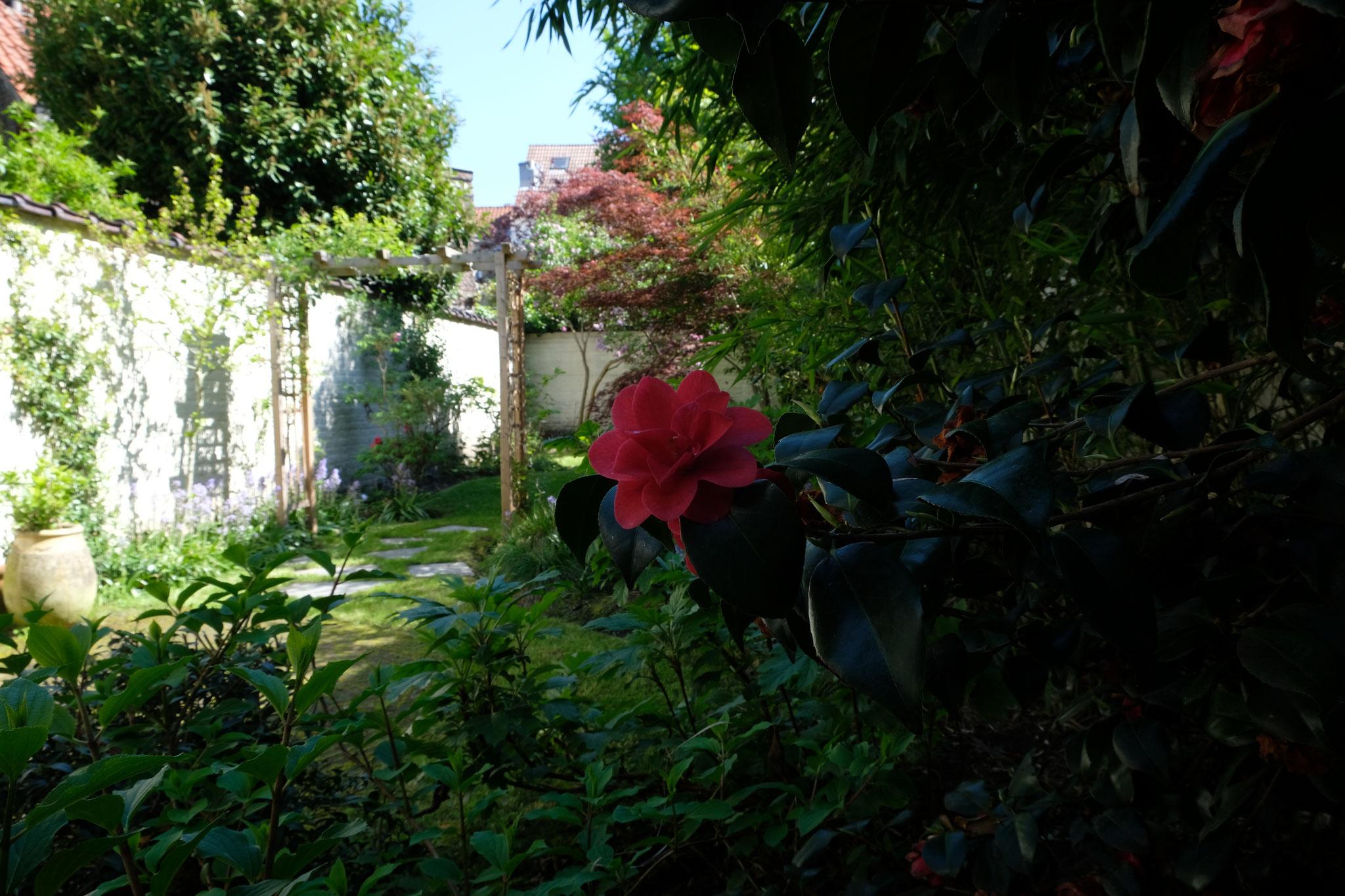 Jardin de ville 120m2 - Jardin de chambres - Le jardin vue de l'entrée/ Printemps 2018. Amenagement jardin Bruxelles