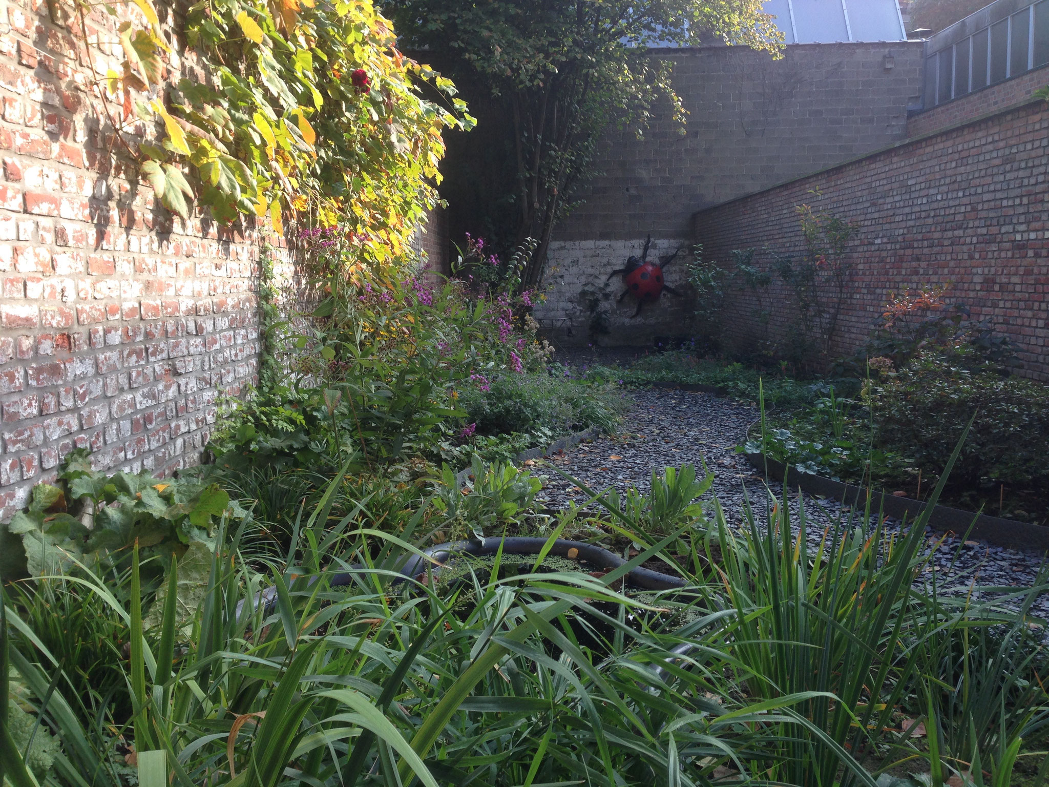 Jardin de ville 120m2 - Après 6 mois . Amenagement jardin Bruxelles