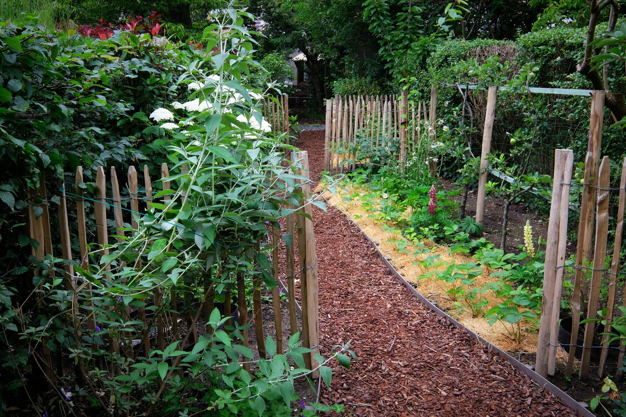 Jardin de ville 120m2 - Agroforesterie urbaine - Entrée dans le verger. Aménagement jardin Bruxelles.