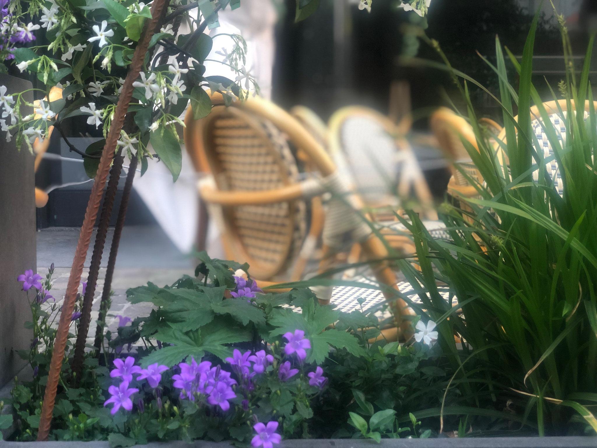"""Terrasse de 50m2 - Ambiance """"Sous-Bois"""" - Détails sur les plantations. Aménagement jardin Bruxelles"""