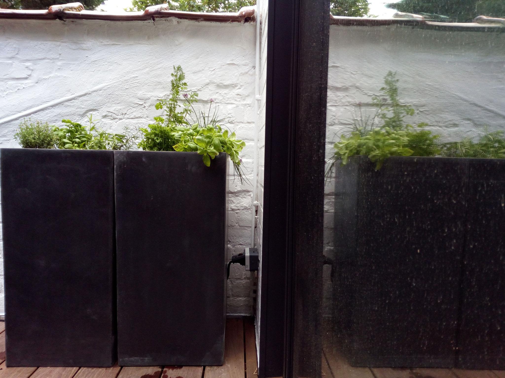 Cour sur 4 niveaux - Niveau haut  / +1an - Détail des plantations de condiments - Amenagement jardin Bruxelles