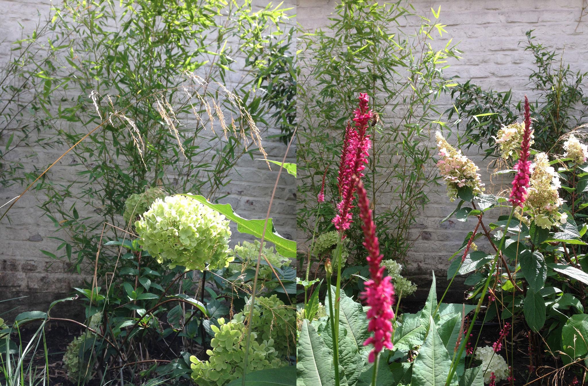 Jardin de ville 120m2 - Jardin de chambres - Détail végétal/ Eté 2016. Amenagement jardin Bruxelles