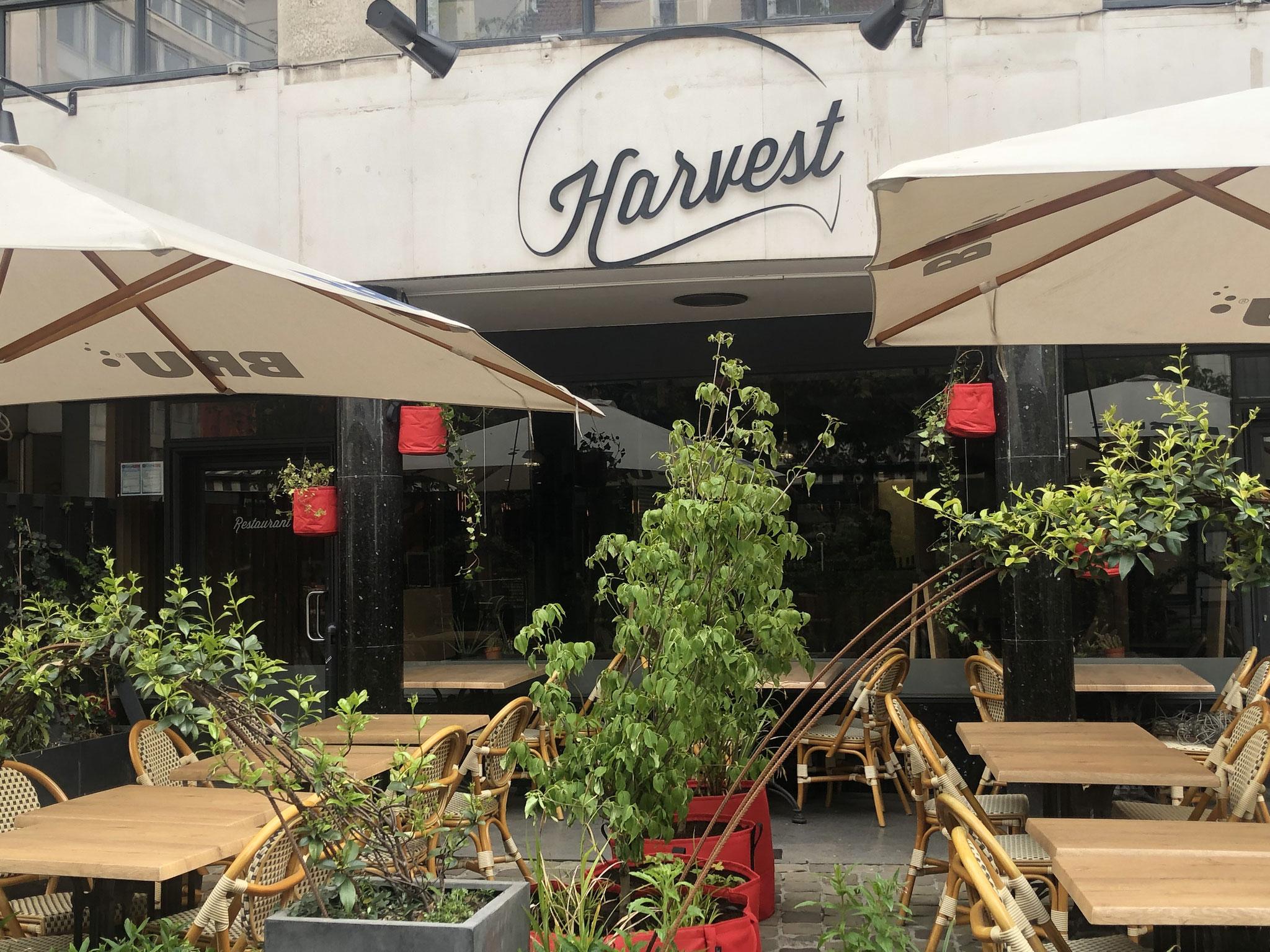 """Terrasse de 50m2 - Ambiance """"Sous-Bois"""" - Les bacs pour délimiter la terrasse et ceux au coeur de la terrasse. Aménagement jardin Bruxelles"""