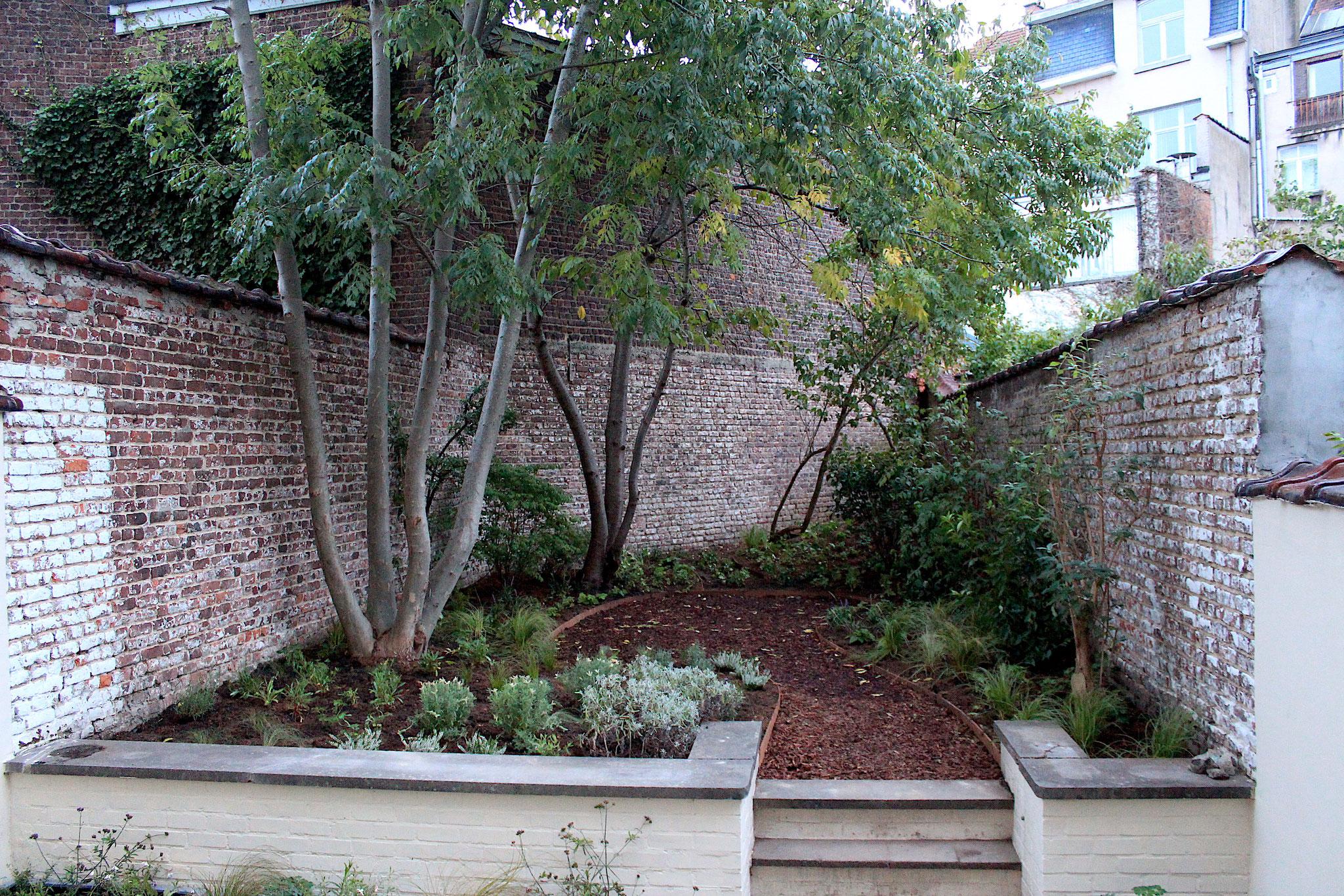 """Jardin de ville 60m2 - Ambiance """"Sous-bois"""". Aménagement Jardin Bruxelles"""