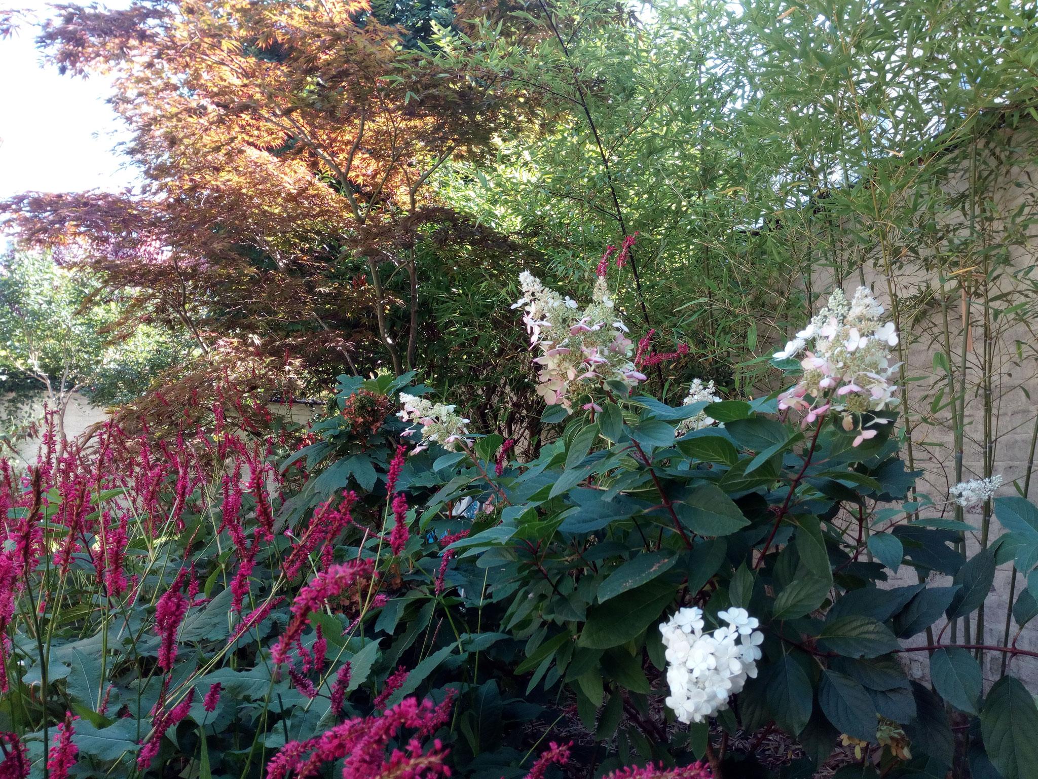 Jardin de ville 120m2 - Jardin de chambres - Détail végétal/ Eté. Amenagement jardin Bruxelles