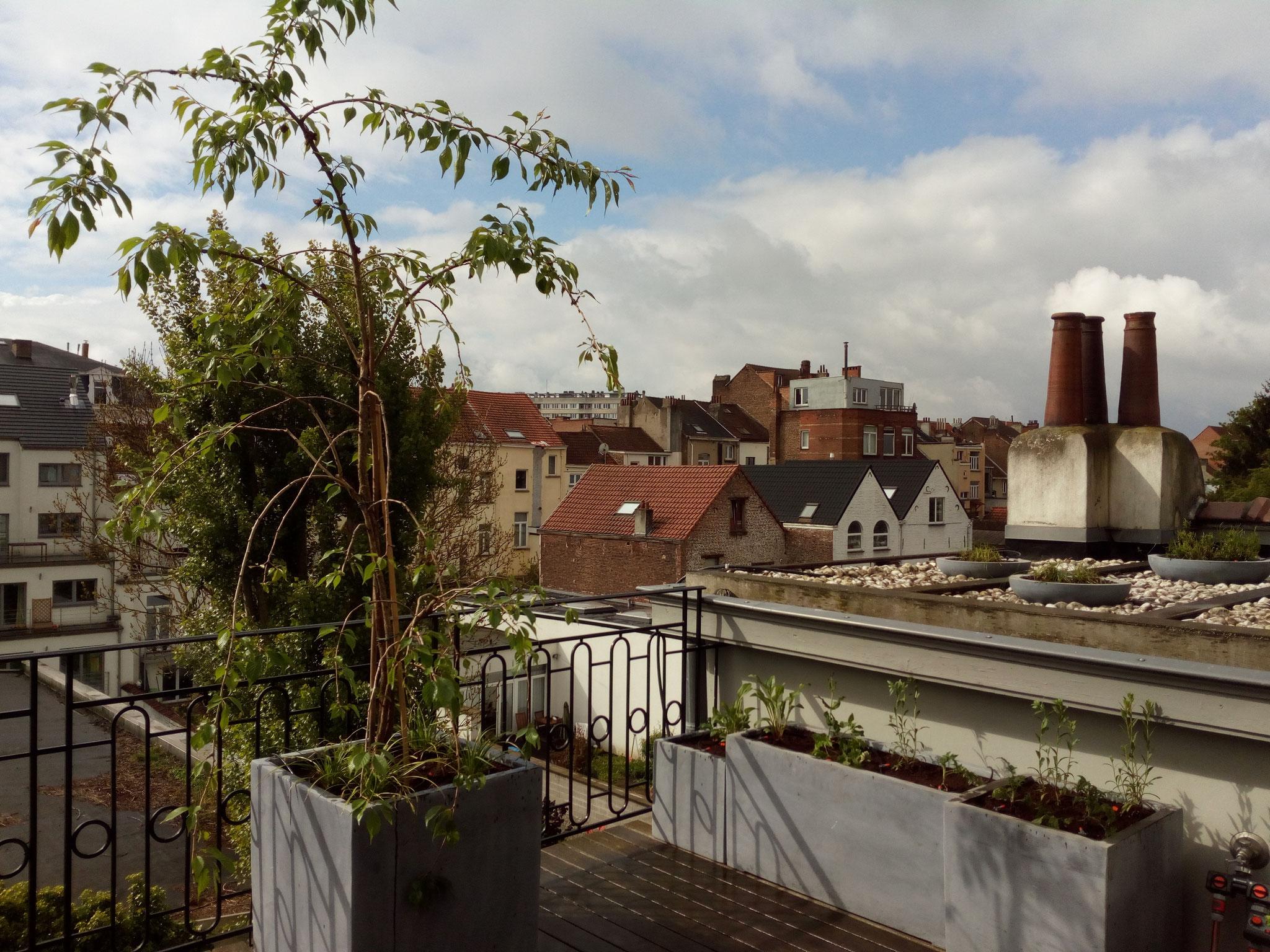 Terrasse 30m2 - Ambiance verger fleuri - Partie droite & face - Amenagement jardin Bruxelles