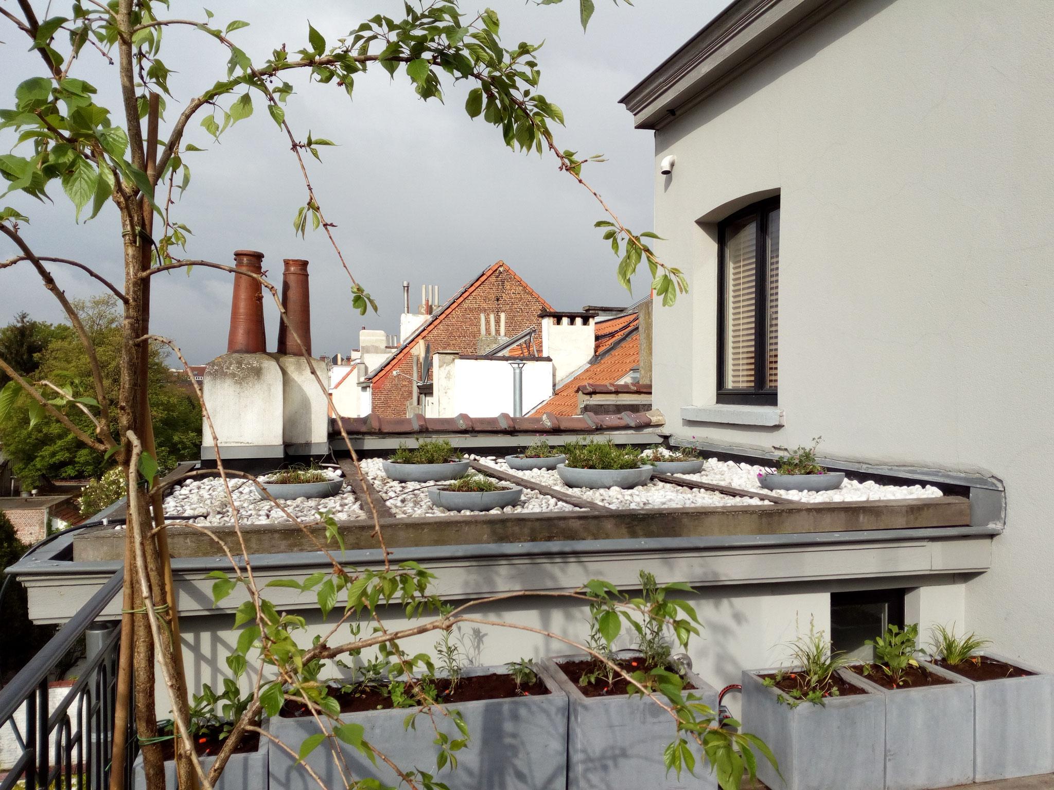 Partie gauche de la terrasse / Toiture - Ambiance rocaille - Amenagement jardin Bruxelles