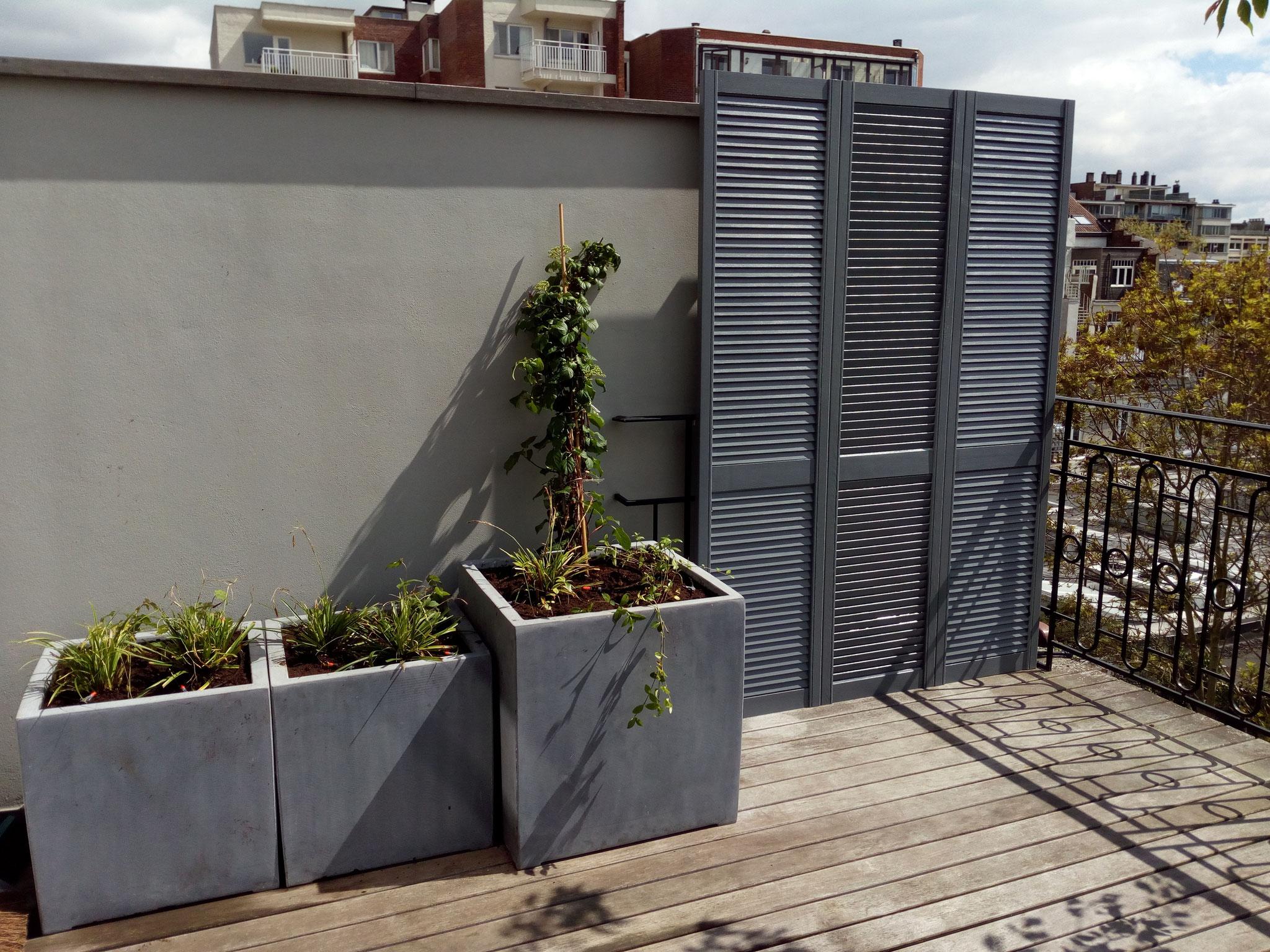 Terrasse 30m2 - Ambiance verger fleuri - Partie gauche - Amenagement jardin Bruxelles