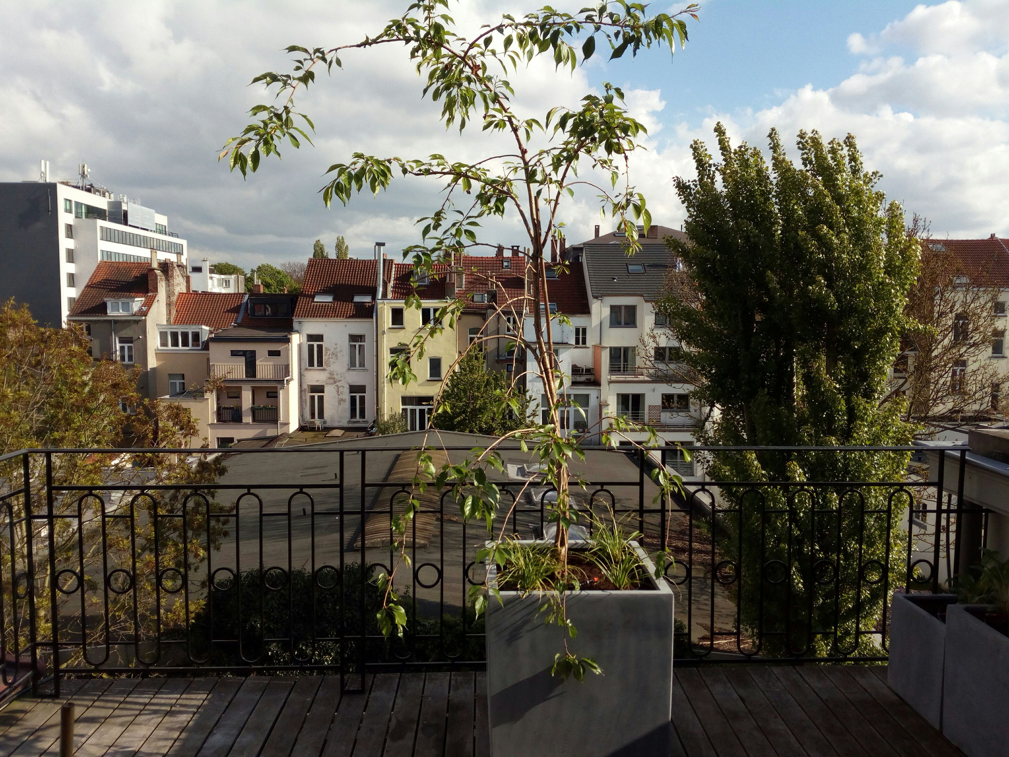 Terrasse 30m2 - Ambiance verger fleuri - Face - Amenagement jardin Bruxelles