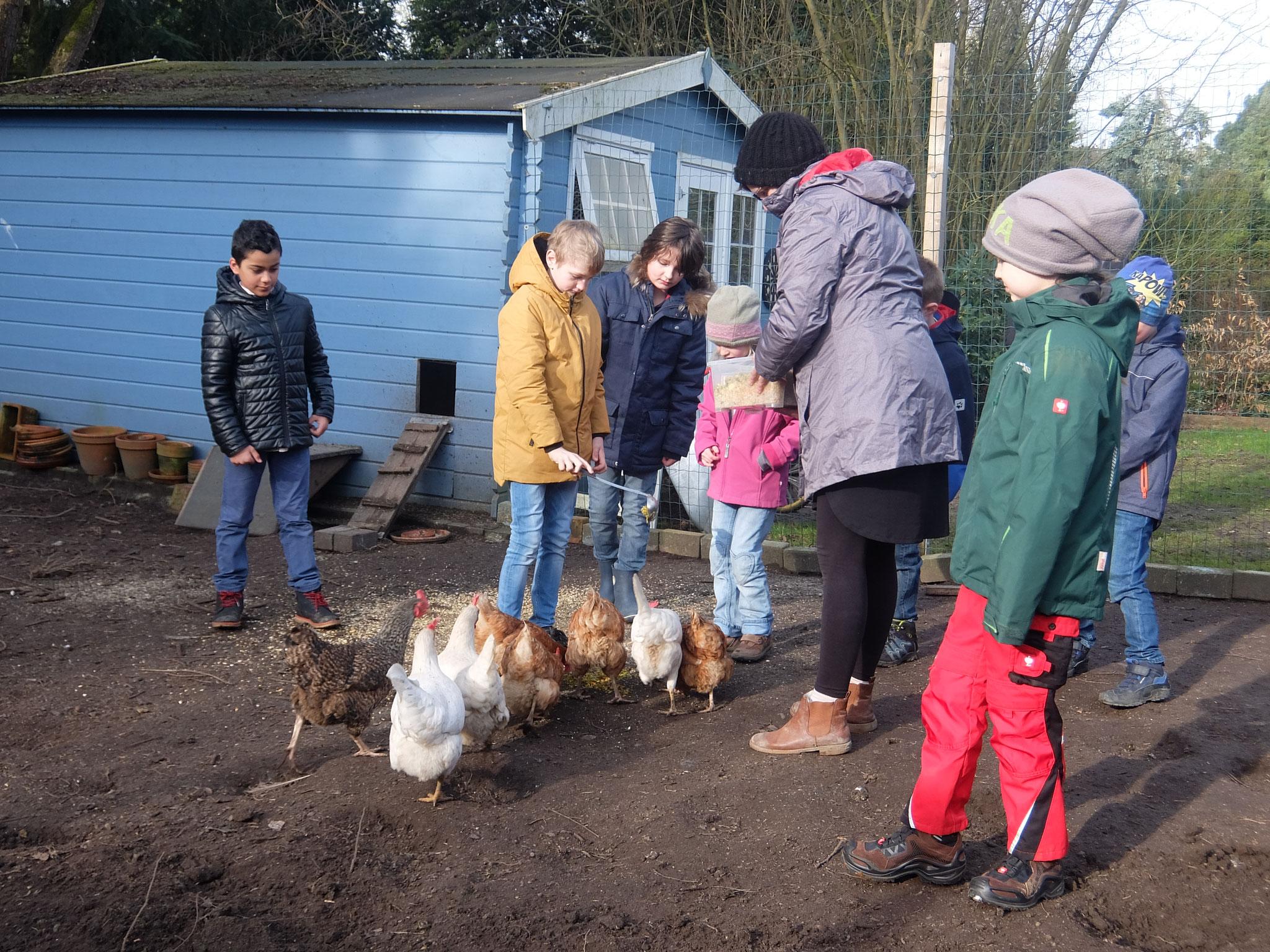 Und wir haben einen kleinen Hühnerstall besucht um zu sehen,