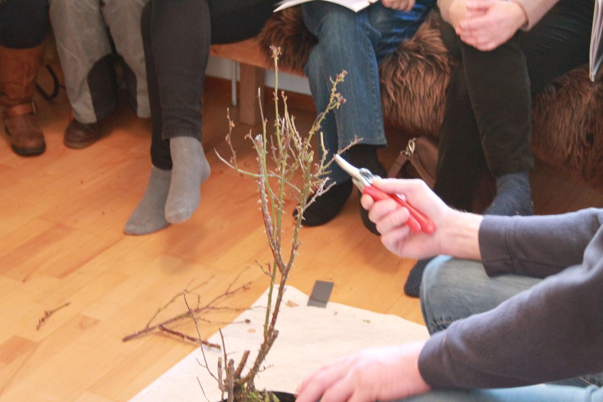 Erstmals im Wohnzimmer: Seminar zweite Blühfreude mit den Themen ...