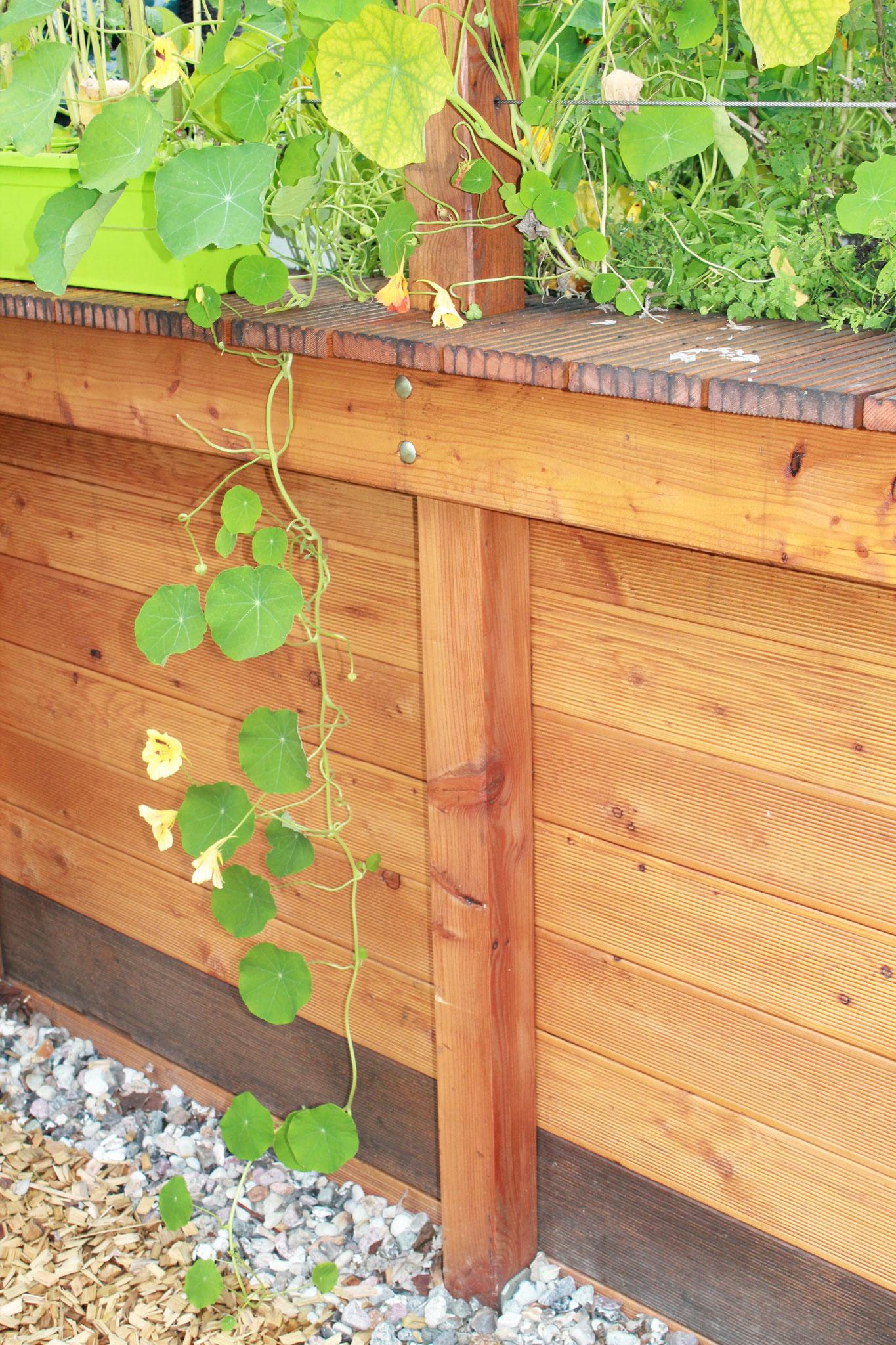Das Köstelgarten-Hochbeet. Ideen und Tipps für die Terrasse