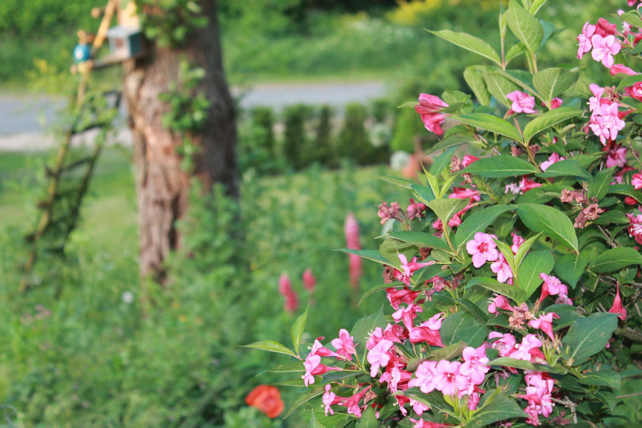 Die Blütenpracht erwarten wir zusammen mit Ihnen
