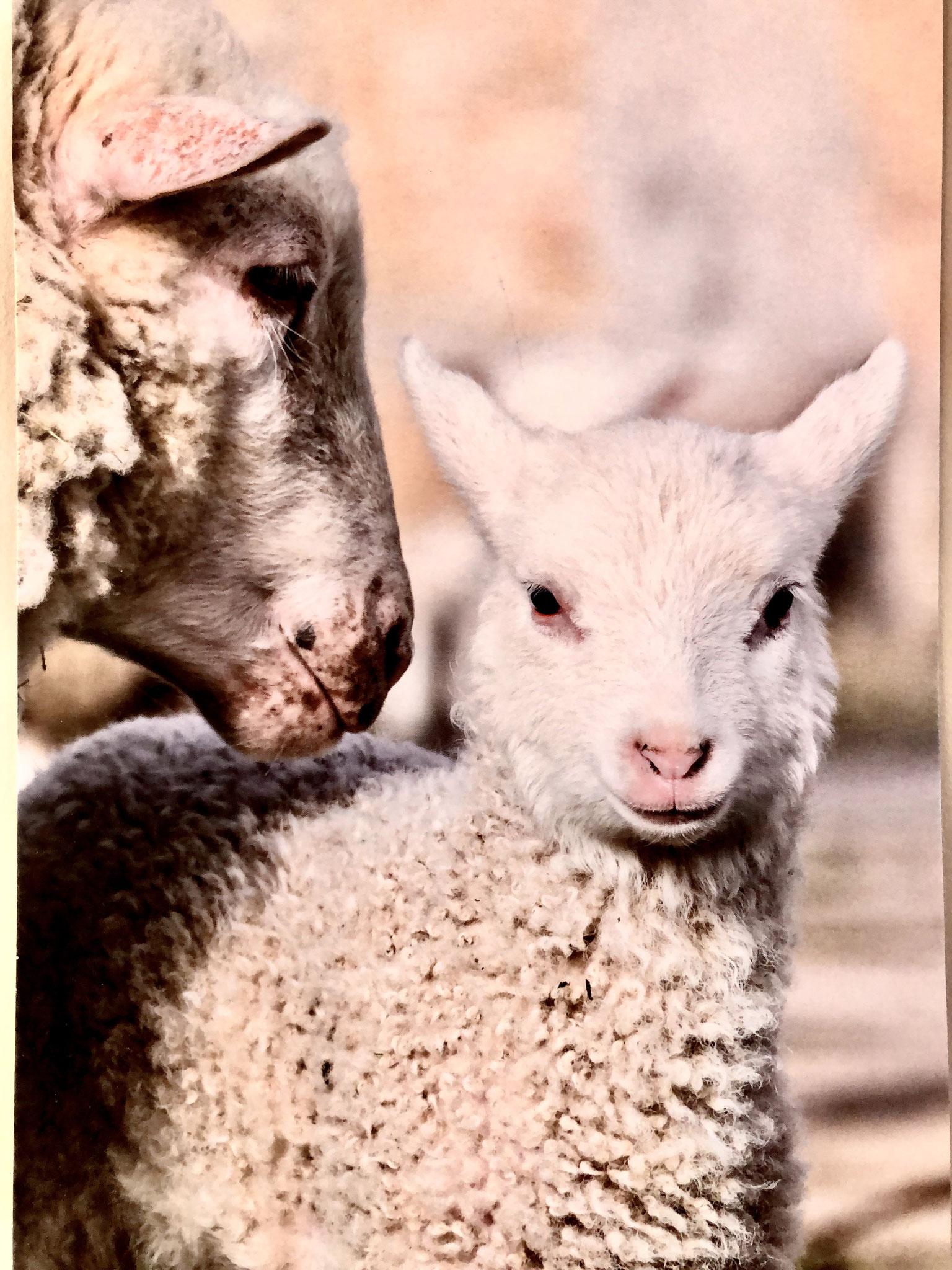 Mamma und ihr Lamm