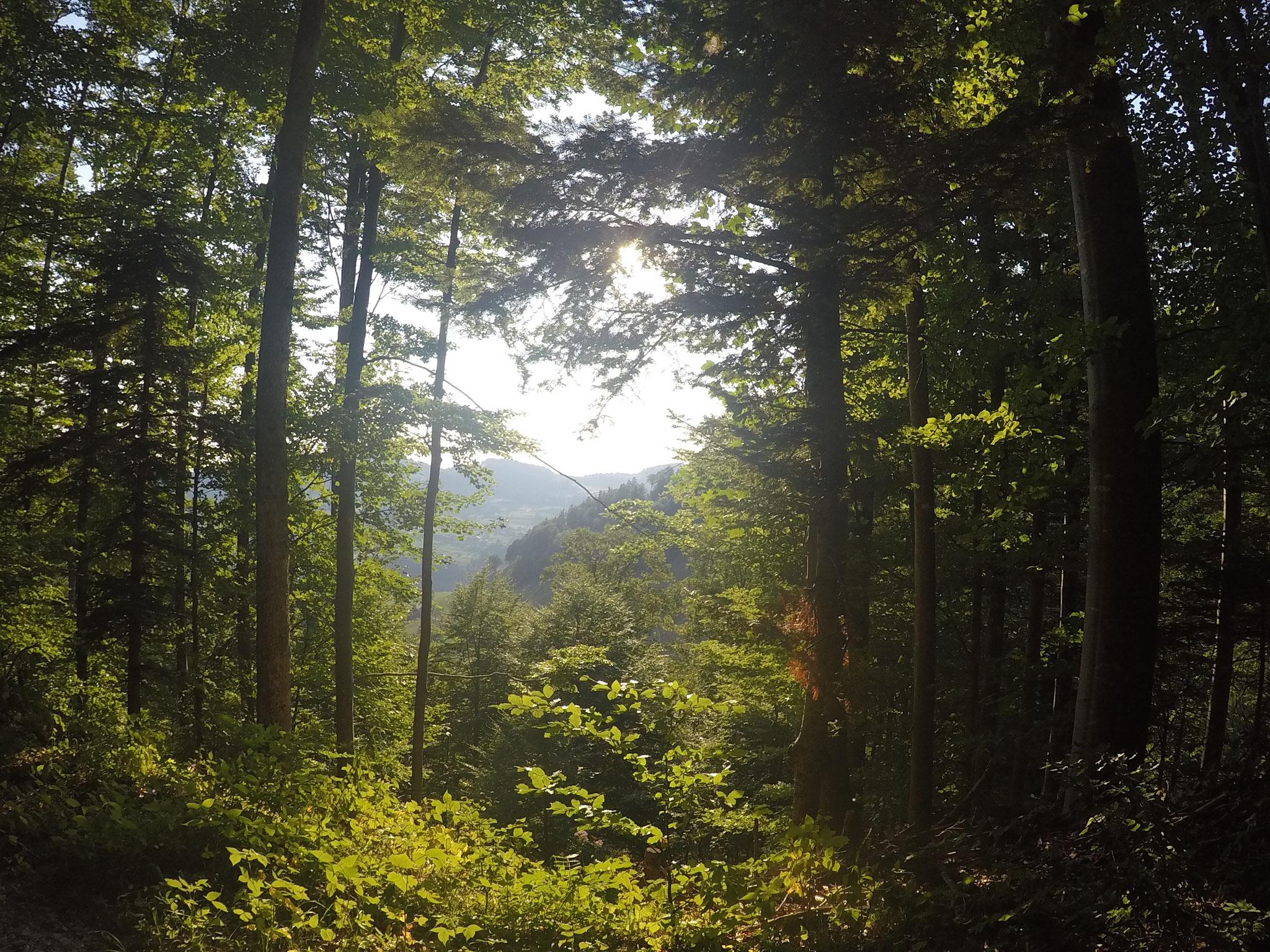 Das Tal Tösstoch