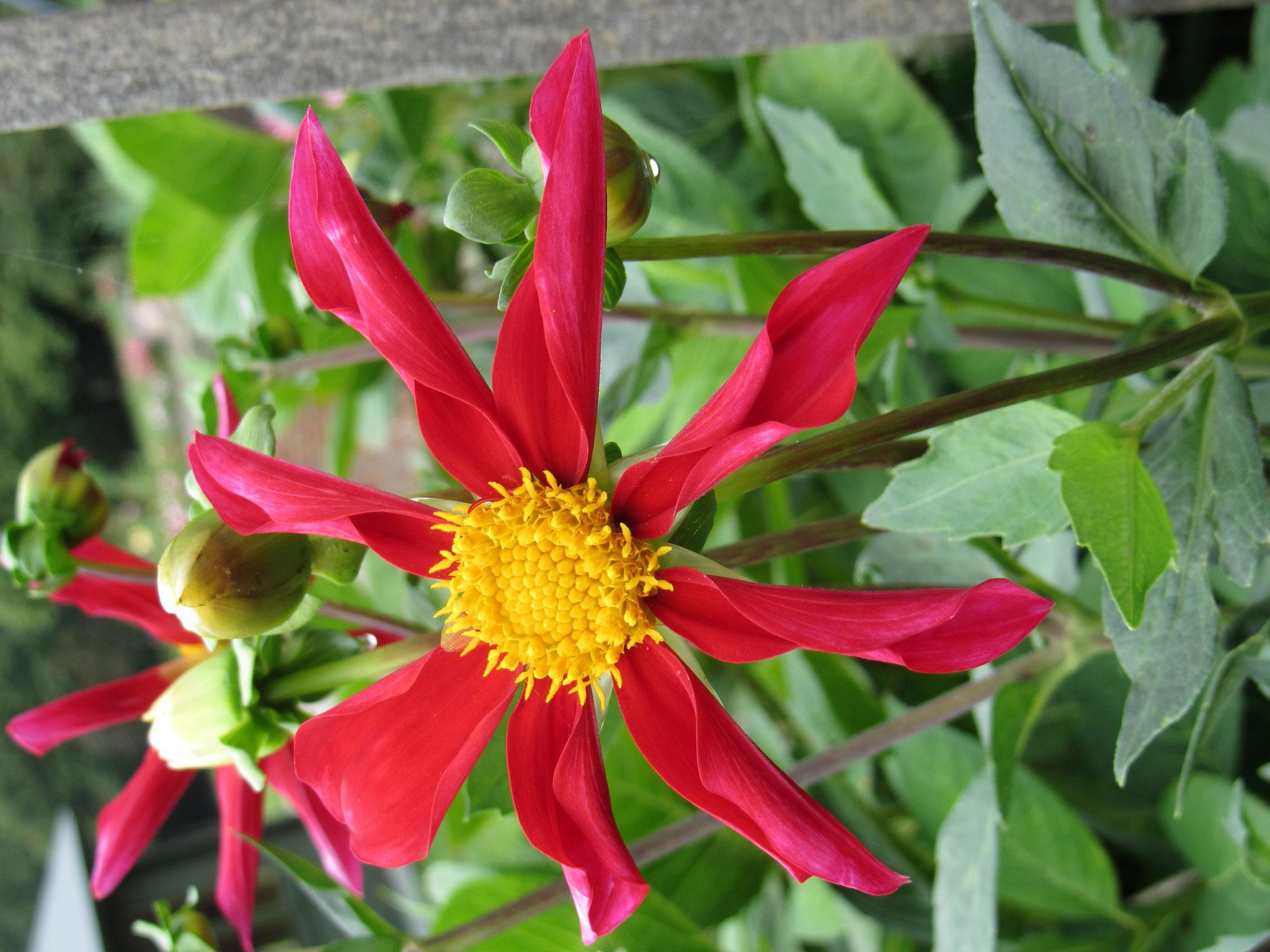 tolle Blumen